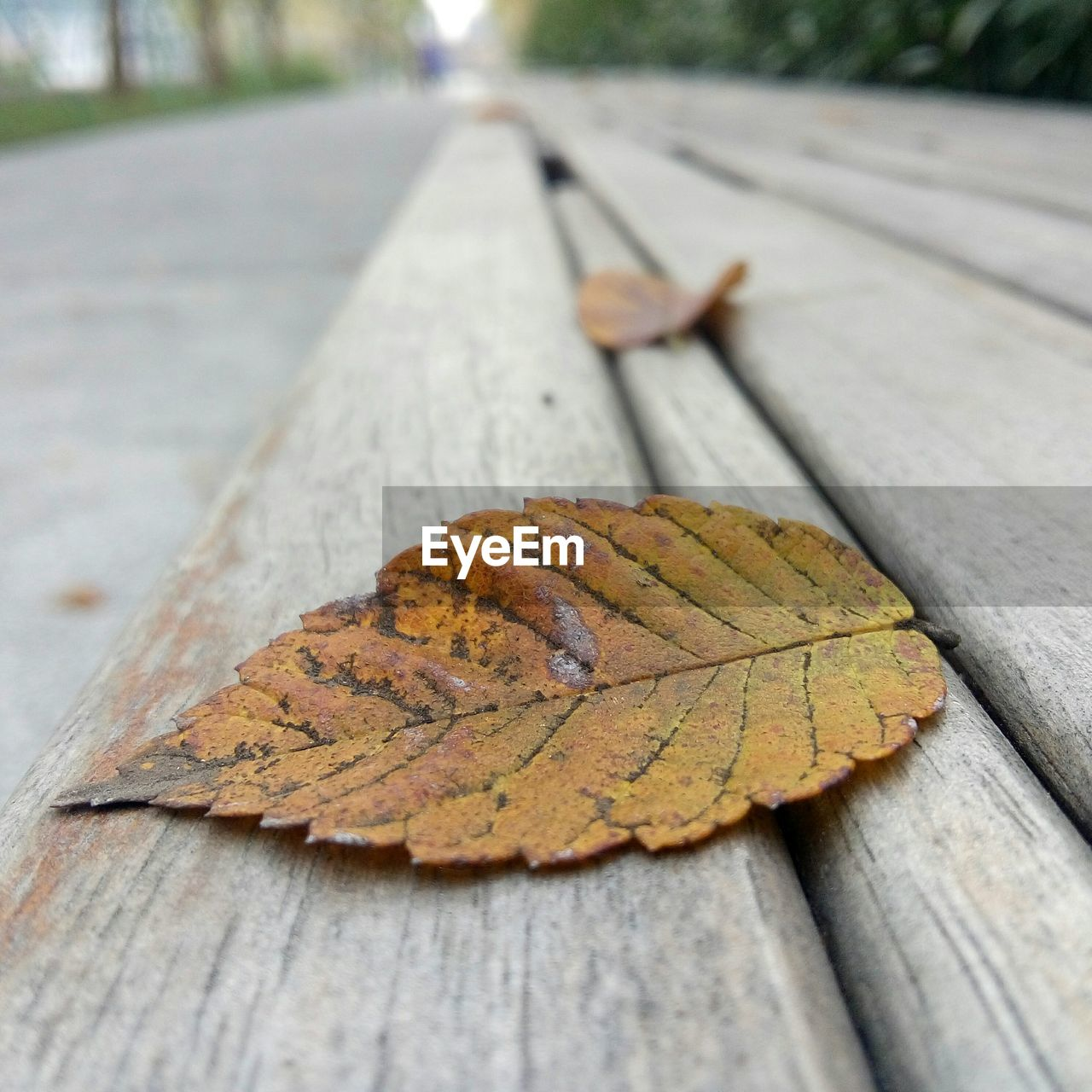 Close-Up Of Fallen Autumn Leaves On Table