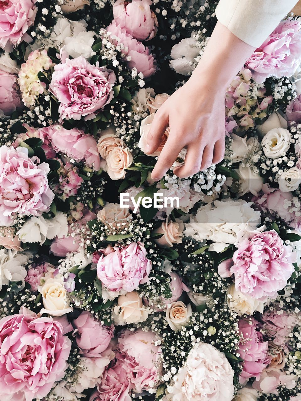 flowering plant, flower, one person, freshness, hand, plant, human hand, beauty in nature, real people, human body part, rose, vulnerability, pink color, petal, rose - flower, fragility, nature, bouquet, flower head, flower arrangement, finger, softness, human limb, bunch of flowers