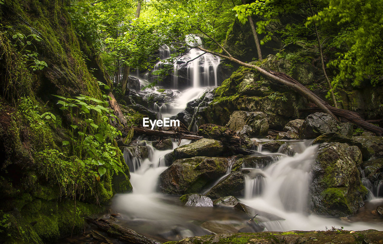 waterfall, water, tree, forest, plant, long exposure, flowing water, beauty in nature, scenics - nature, motion, nature, land, growth, rock, environment, lush foliage, solid, power in nature, rock - object, rainforest, no people, flowing, outdoors, falling water