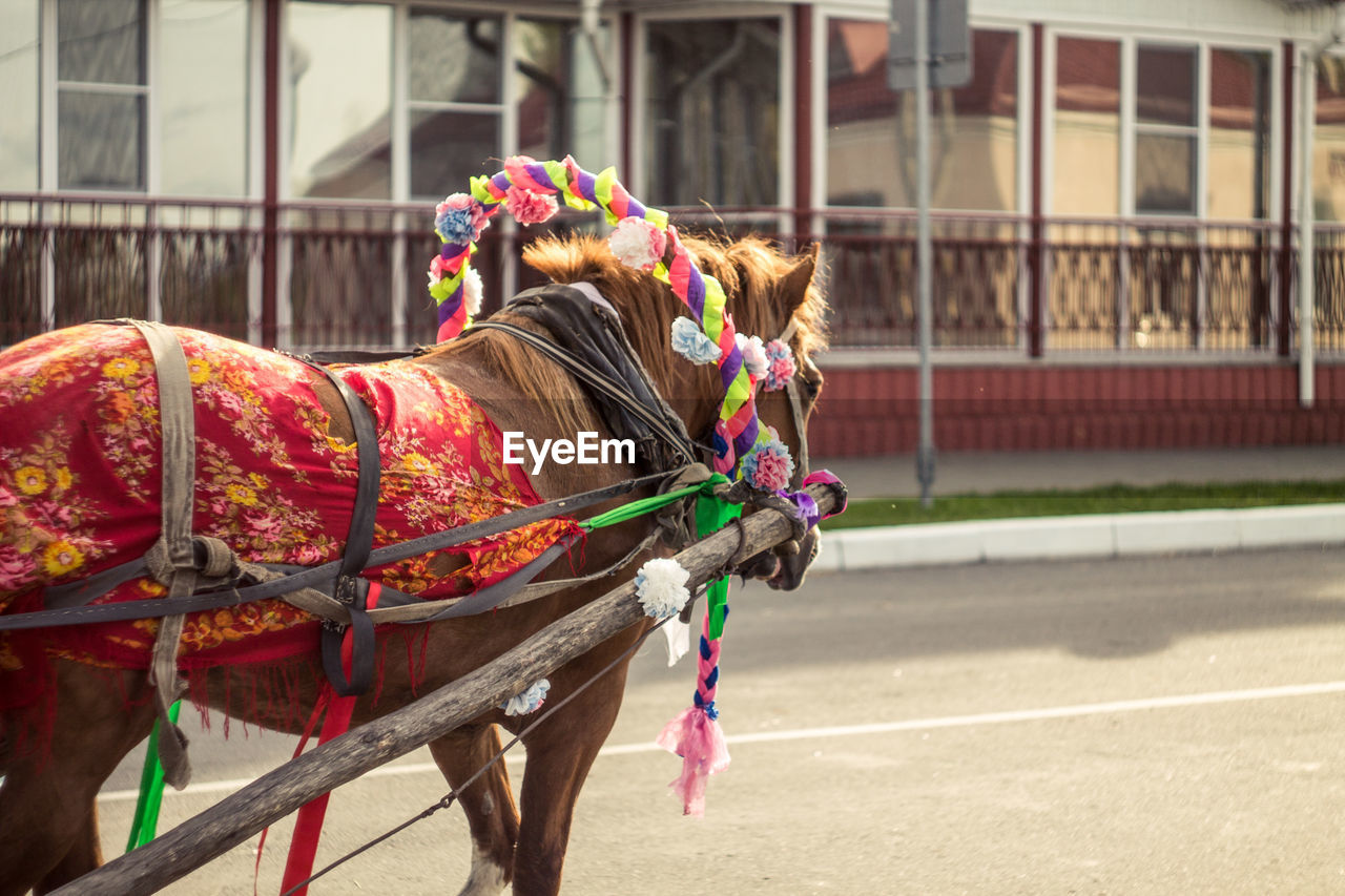 Horse pulling carriage on street against building in city