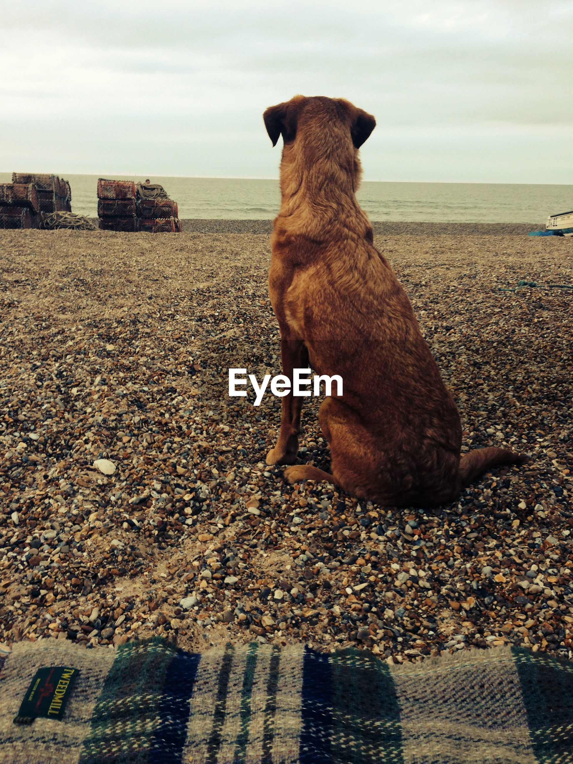 Dog sitting at beach against sky