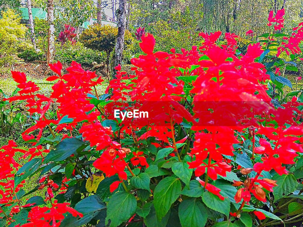 nature, growth, leaf, plant, beauty in nature, outdoors, day, no people, flower, red, autumn, fragility, freshness, close-up