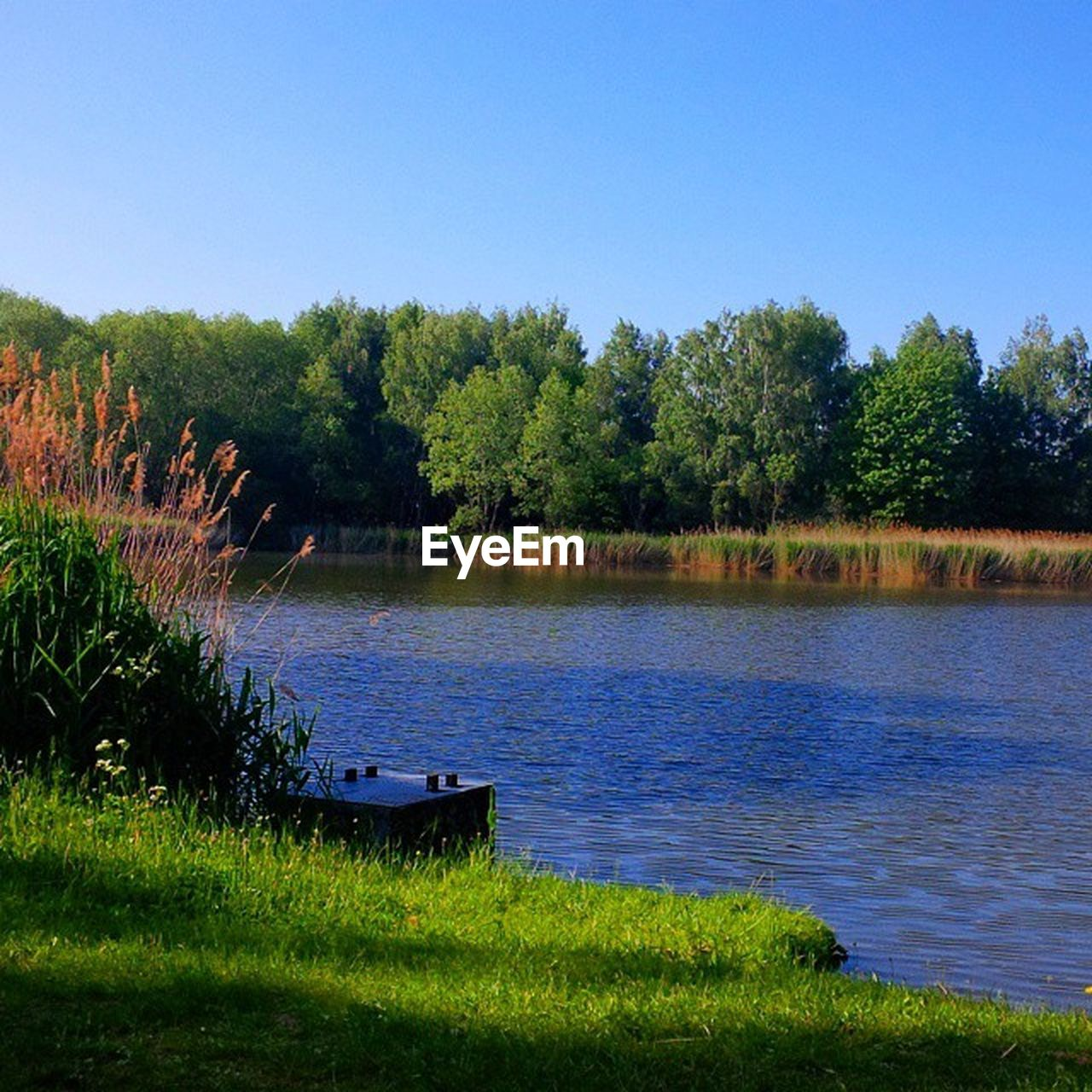 lake, tree, water, nature, tranquility, beauty in nature, grass, tranquil scene, scenics, no people, outdoors, growth, day, clear sky, sky