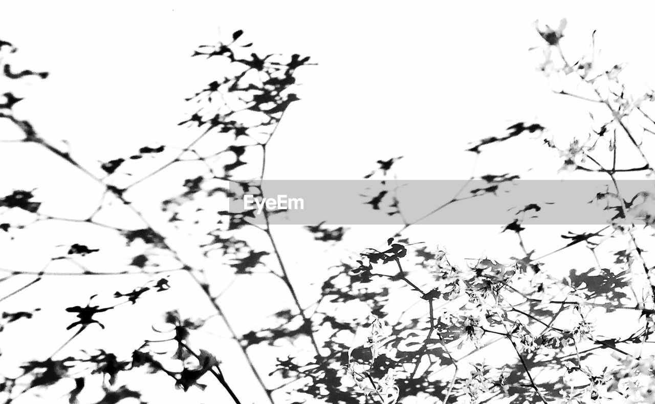 nature, growth, low angle view, clear sky, no people, day, beauty in nature, outdoors, branch, sky, flower, bird, flying, fragility, tree, animal themes, freshness, close-up, flower head