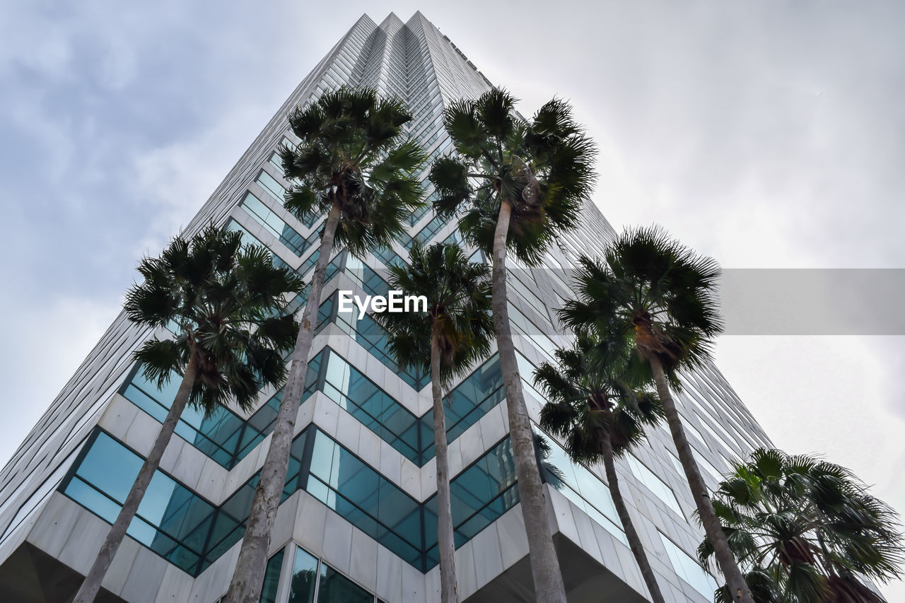 low angle view, palm tree, tree, architecture, built structure, building exterior, sky, growth, no people, day, outdoors, nature