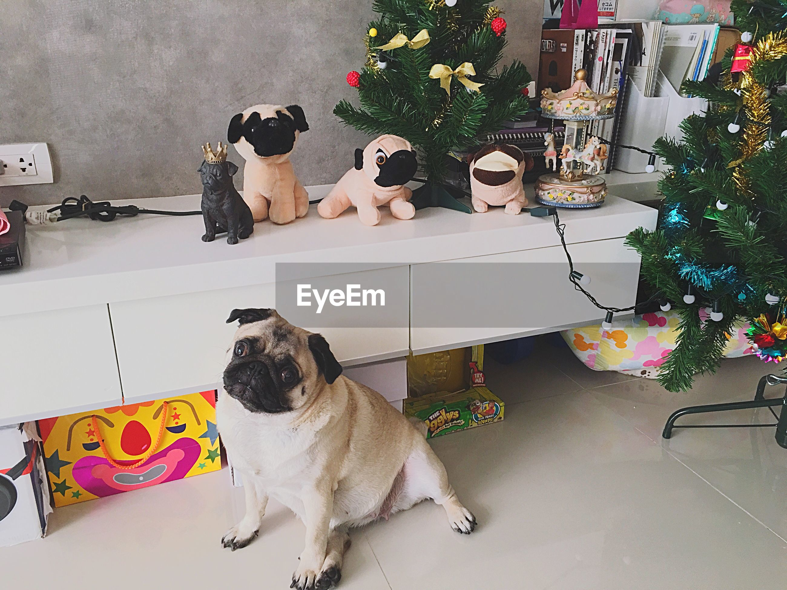 pets, domestic animals, mammal, domestic cat, animal themes, one animal, cat, dog, feline, high angle view, relaxation, flower, indoors, sitting, full length, tiled floor, lying down, black color, potted plant, resting