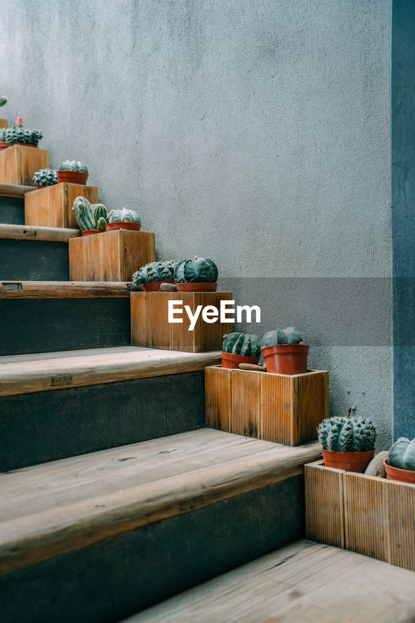 Potted plant on staircase against wall
