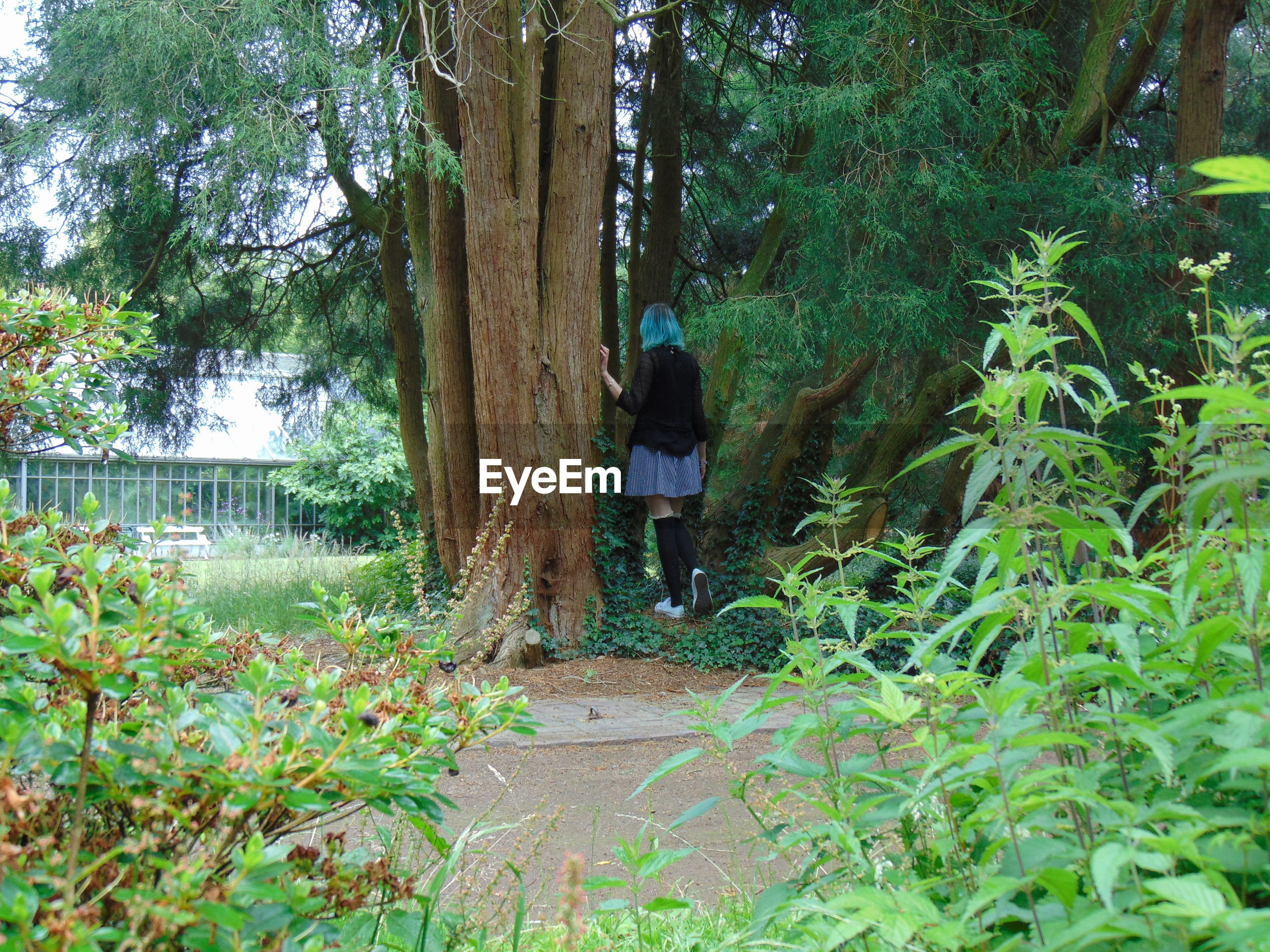 Rear view of woman walking by trees in park