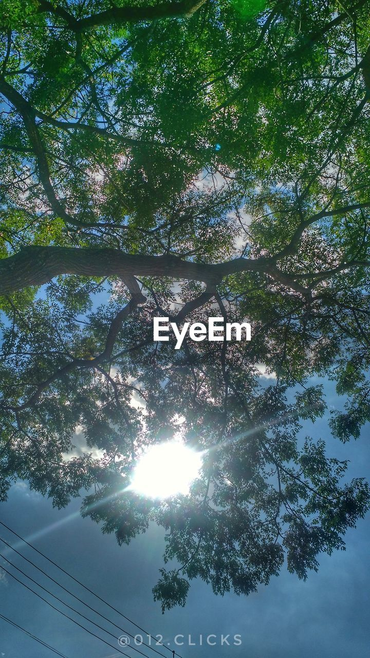 tree, low angle view, nature, beauty in nature, growth, day, no people, tranquility, outdoors, branch, sunlight, sky, scenics