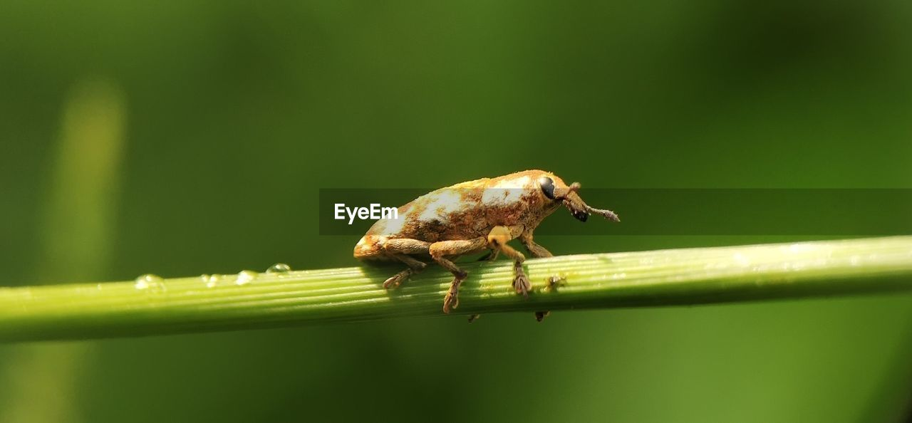 one animal, animal themes, animal, animals in the wild, animal wildlife, green color, insect, invertebrate, close-up, nature, no people, day, plant part, leaf, focus on foreground, plant, selective focus, zoology, outdoors, vertebrate