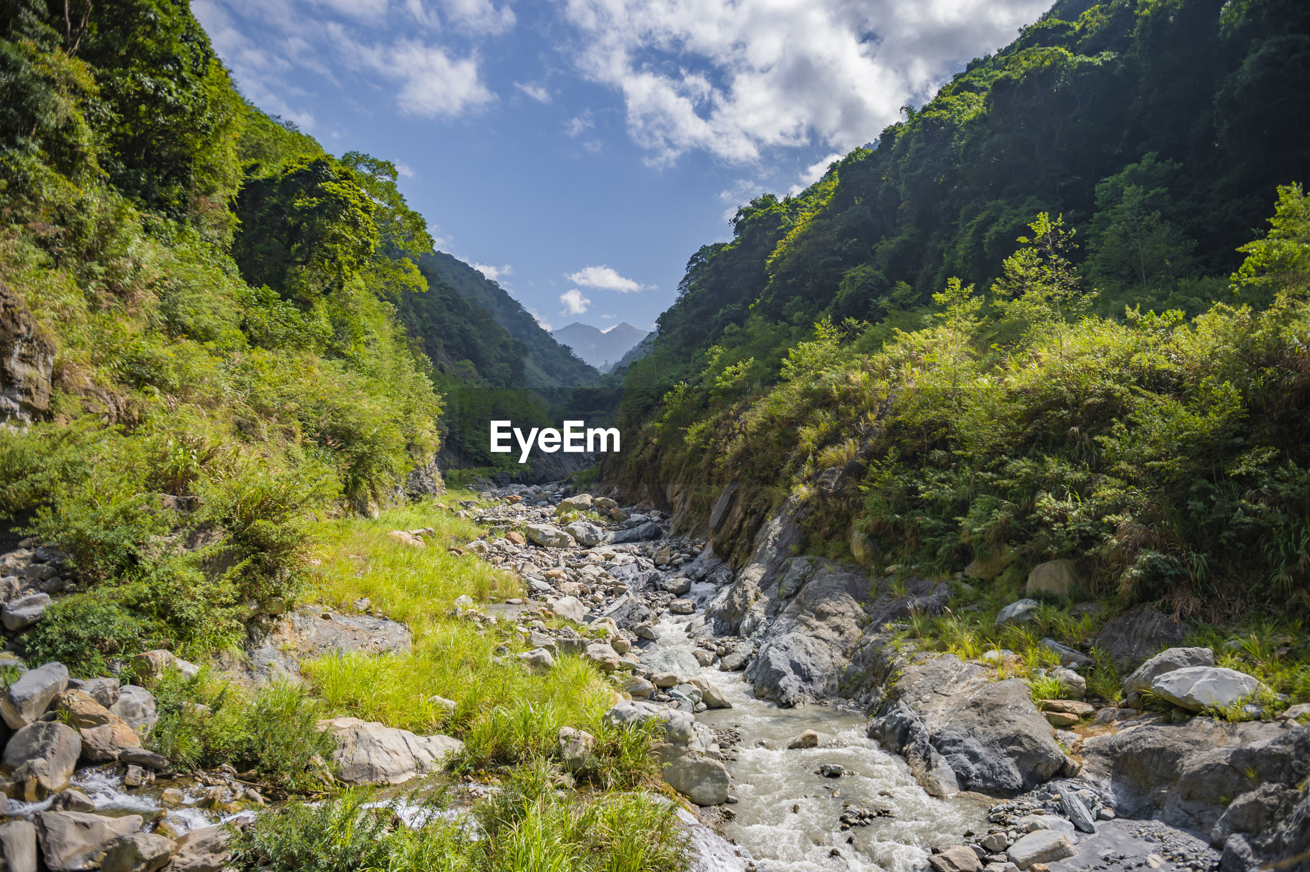 Scenic view of stream amidst trees against sky