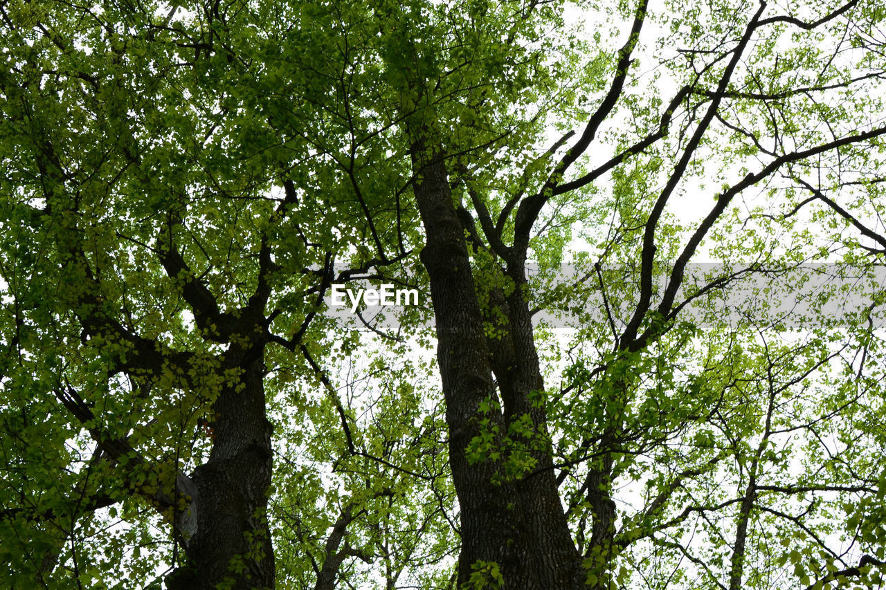 tree, nature, low angle view, growth, branch, day, forest, outdoors, beauty in nature, foliage, backgrounds, no people