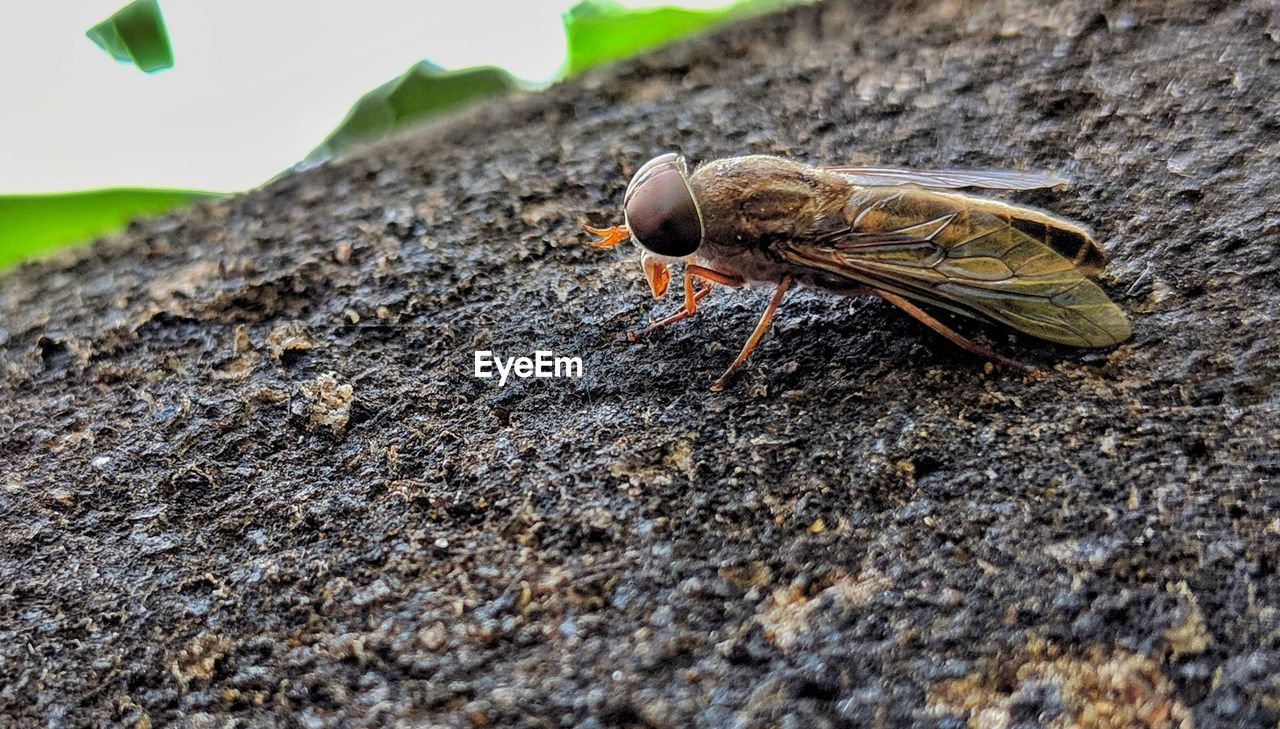 animal themes, animal wildlife, animals in the wild, one animal, animal, selective focus, day, invertebrate, no people, close-up, insect, nature, outdoors, solid, textured, wood - material, bird, rock, side view, rock - object