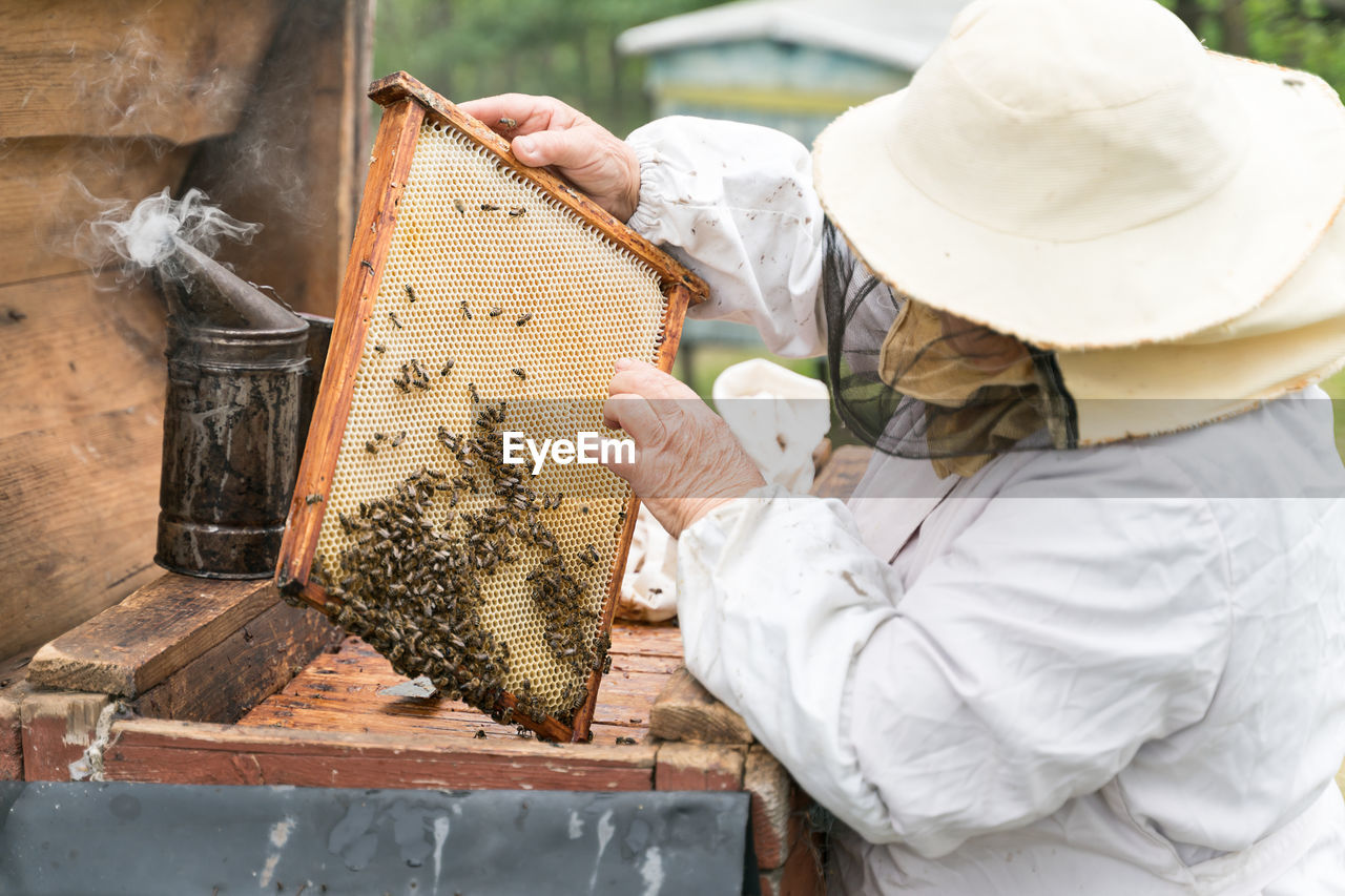 Beekeeper holding up tray of honeycomb at park