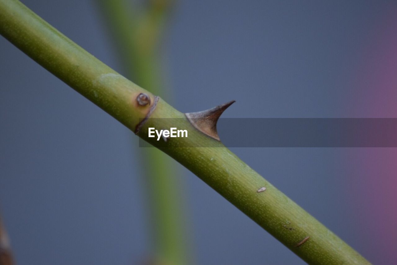 growth, green color, close-up, nature, day, no people, plant, focus on foreground, outdoors, beauty in nature, freshness