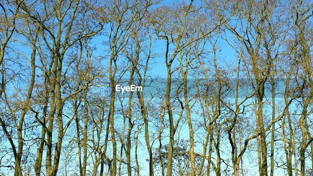 nature, tree, low angle view, beauty in nature, day, outdoors, tranquility, no people, blue, forest, growth, branch, clear sky, scenics, bare tree, sky