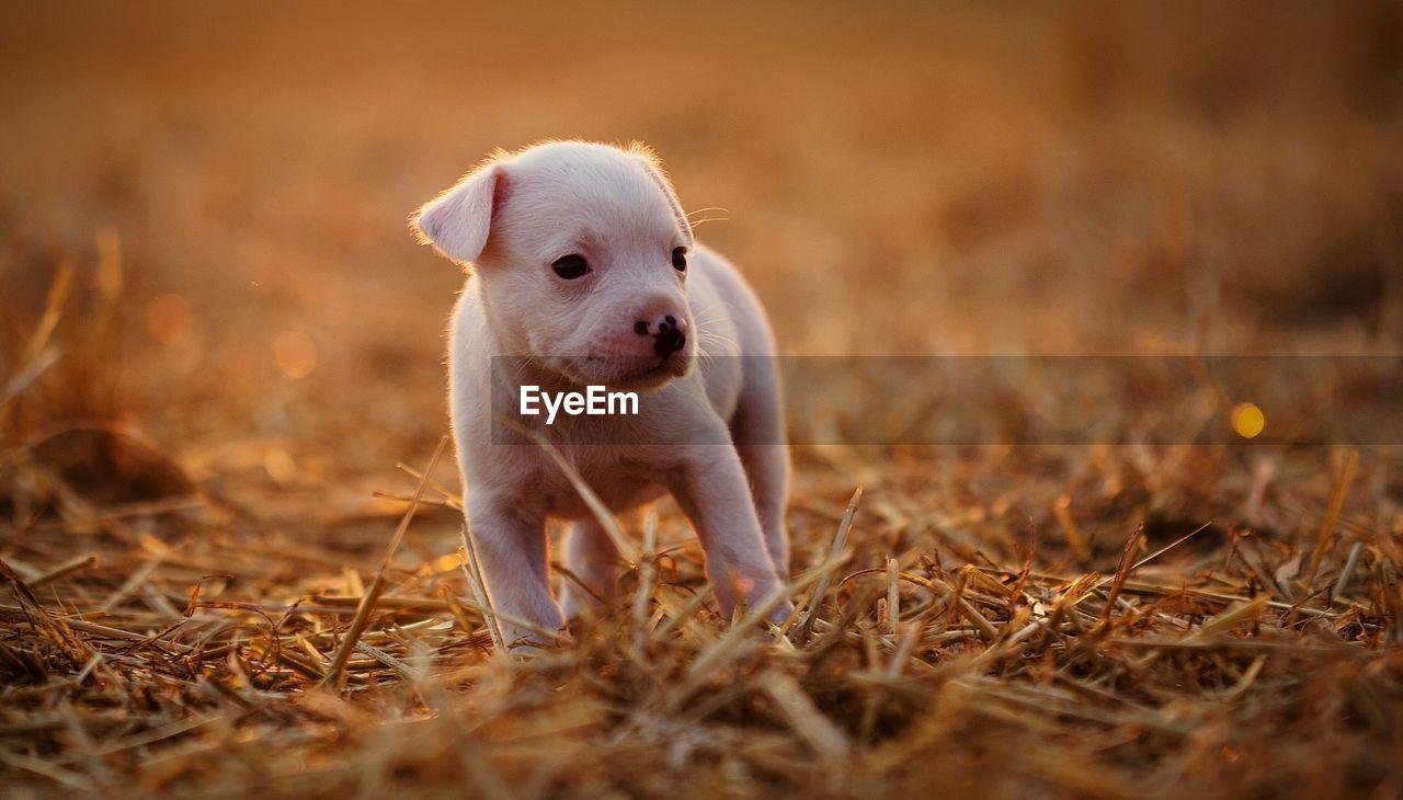 Puppy on hay grass