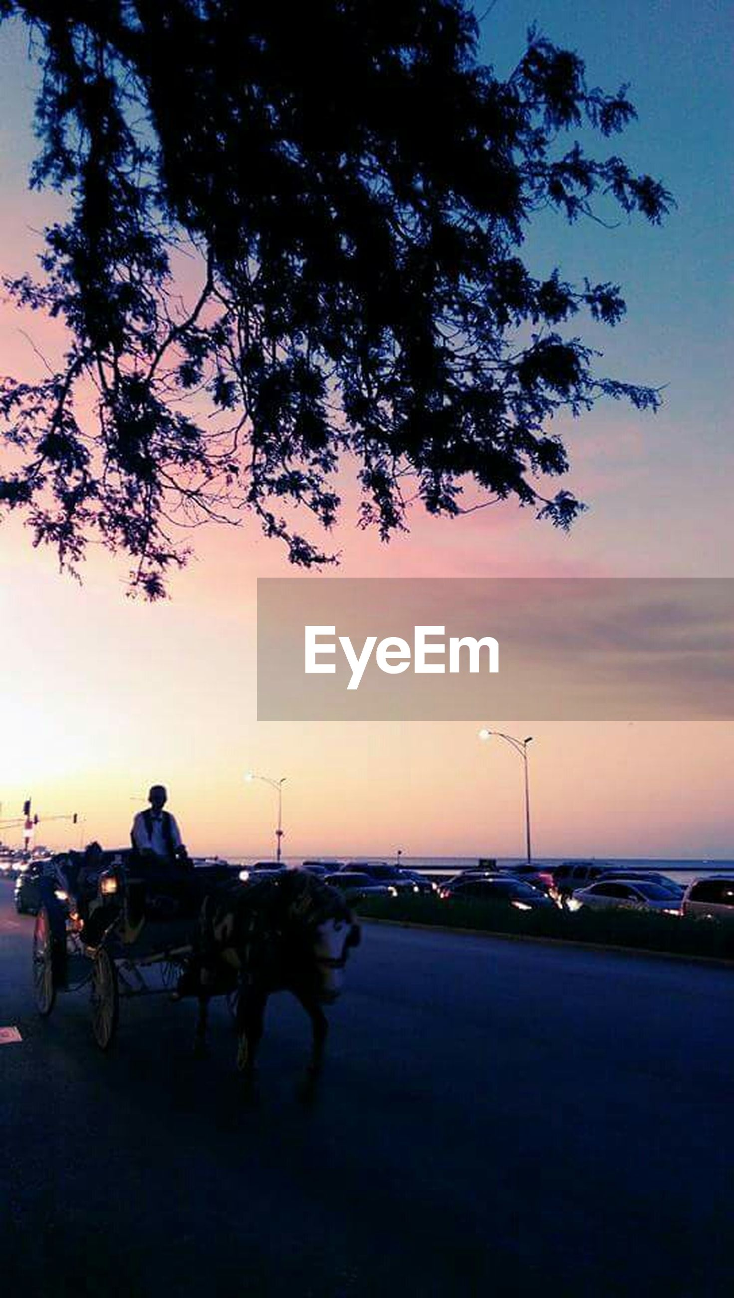 transportation, mode of transport, land vehicle, car, tree, sunset, sky, road, silhouette, street, stationary, travel, street light, the way forward, dusk, parking, nature, scenics, outdoors, tranquility