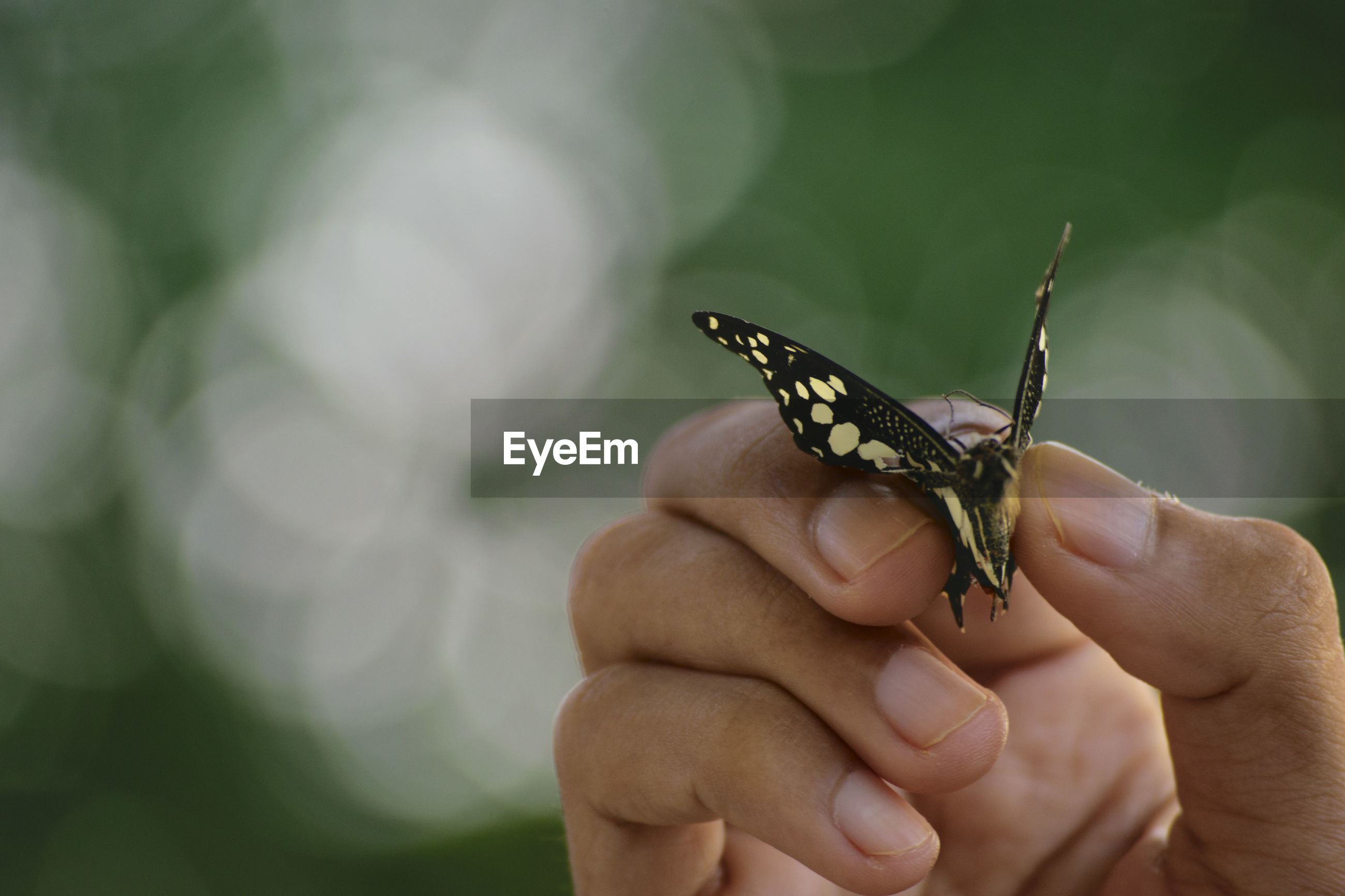 Close-up of hand holding insect