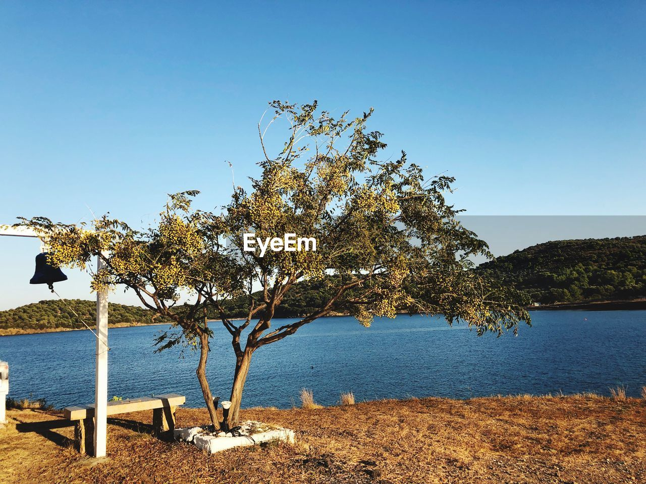 tree, nature, water, tranquil scene, clear sky, beauty in nature, day, scenics, tranquility, blue, outdoors, sea, no people, growth, sky, bird, animal themes