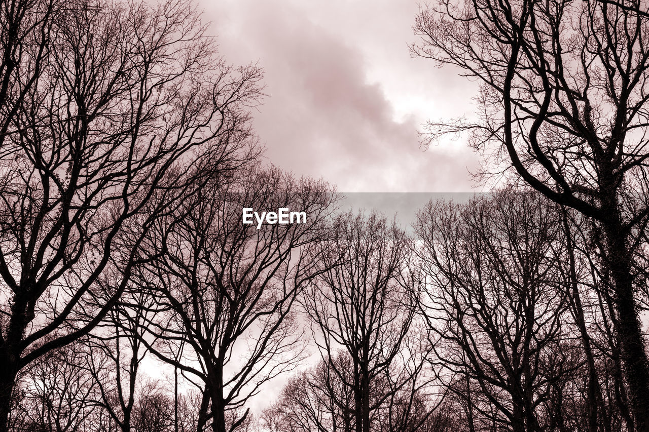 bare tree, branch, tree, low angle view, sky, nature, beauty in nature, outdoors, tranquility, no people, day, scenics