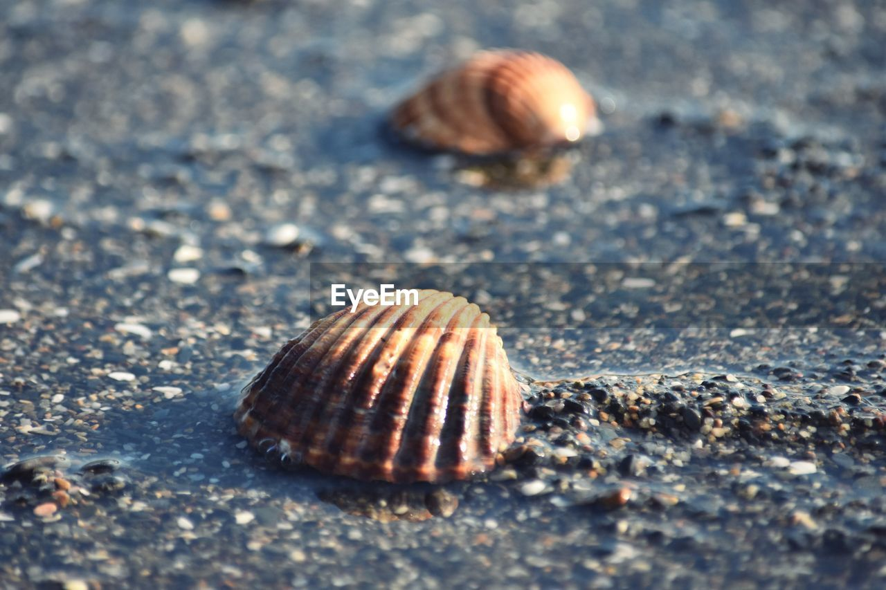 shell, animal wildlife, animal shell, animal, animal themes, animals in the wild, close-up, nature, day, land, no people, seashell, selective focus, beauty in nature, natural pattern, beach, one animal, sand, mollusk, sea, outdoors, marine, surface level