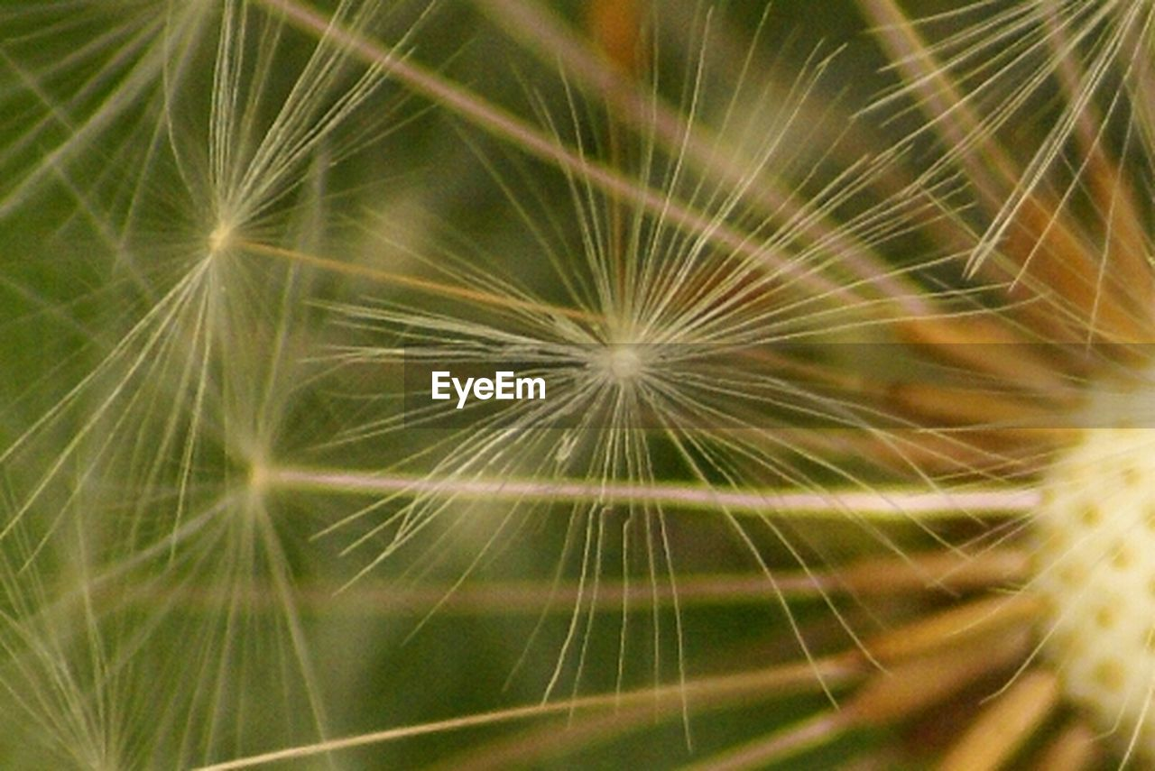 dandelion, nature, freshness, fragility, close-up, growth, softness, flower, outdoors, beauty in nature, full frame, no people, day
