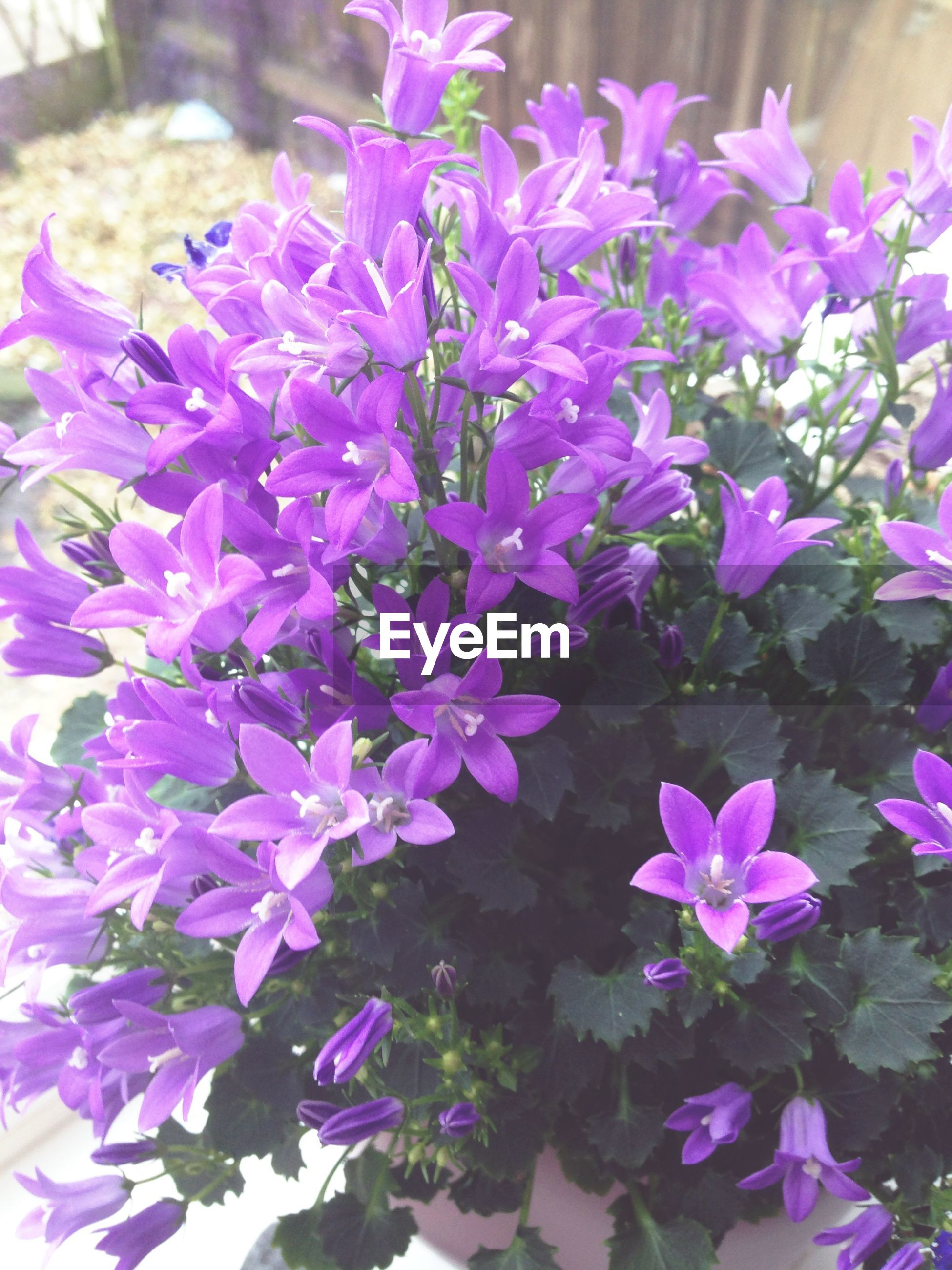 flower, freshness, petal, purple, fragility, flower head, beauty in nature, growth, close-up, pink color, nature, plant, blooming, focus on foreground, in bloom, high angle view, no people, selective focus, day, park - man made space