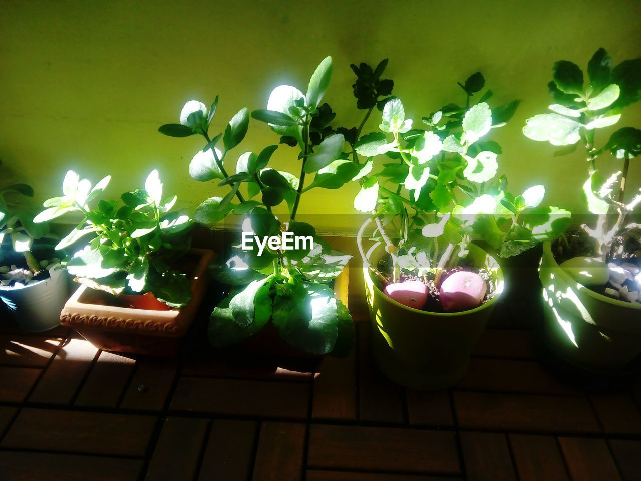 potted plant, plant, growth, no people, indoors, green color, leaf, nature, day, flower, freshness, beauty in nature, close-up