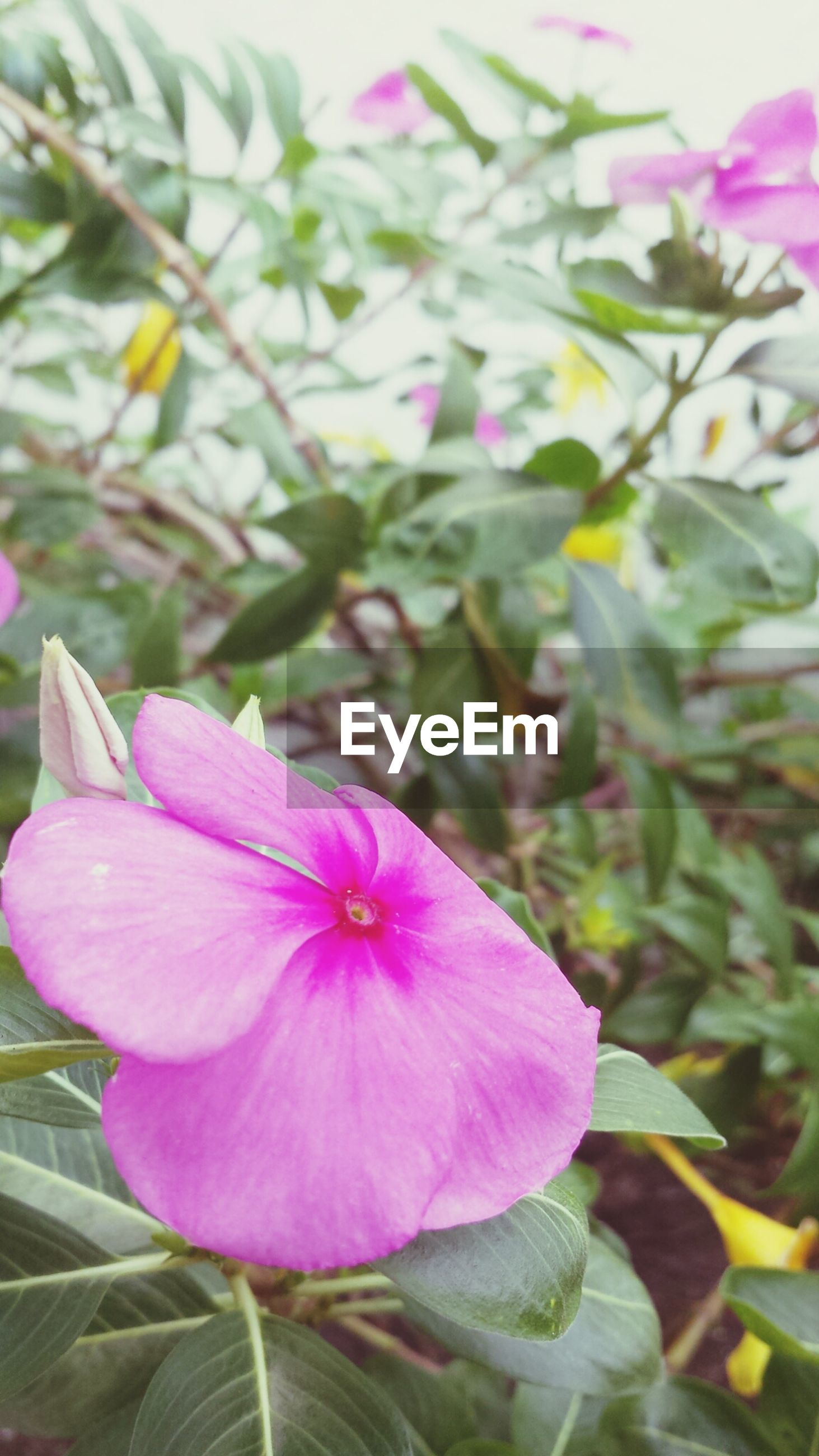 flower, freshness, petal, fragility, flower head, growth, beauty in nature, purple, close-up, blooming, pink color, nature, focus on foreground, plant, in bloom, leaf, blossom, day, pollen, park - man made space