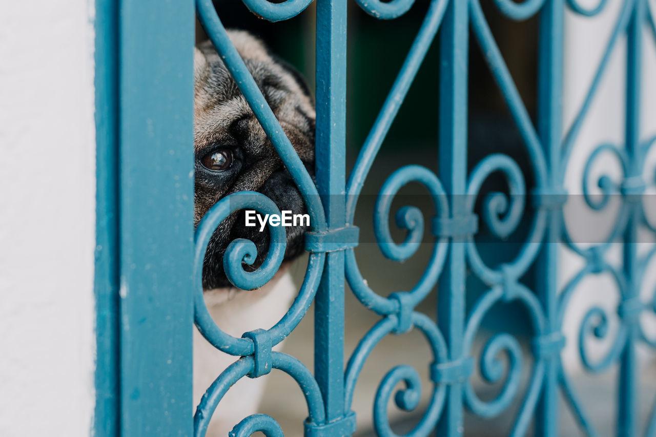 Close-Up Of Dog Looking Through Metallic Window