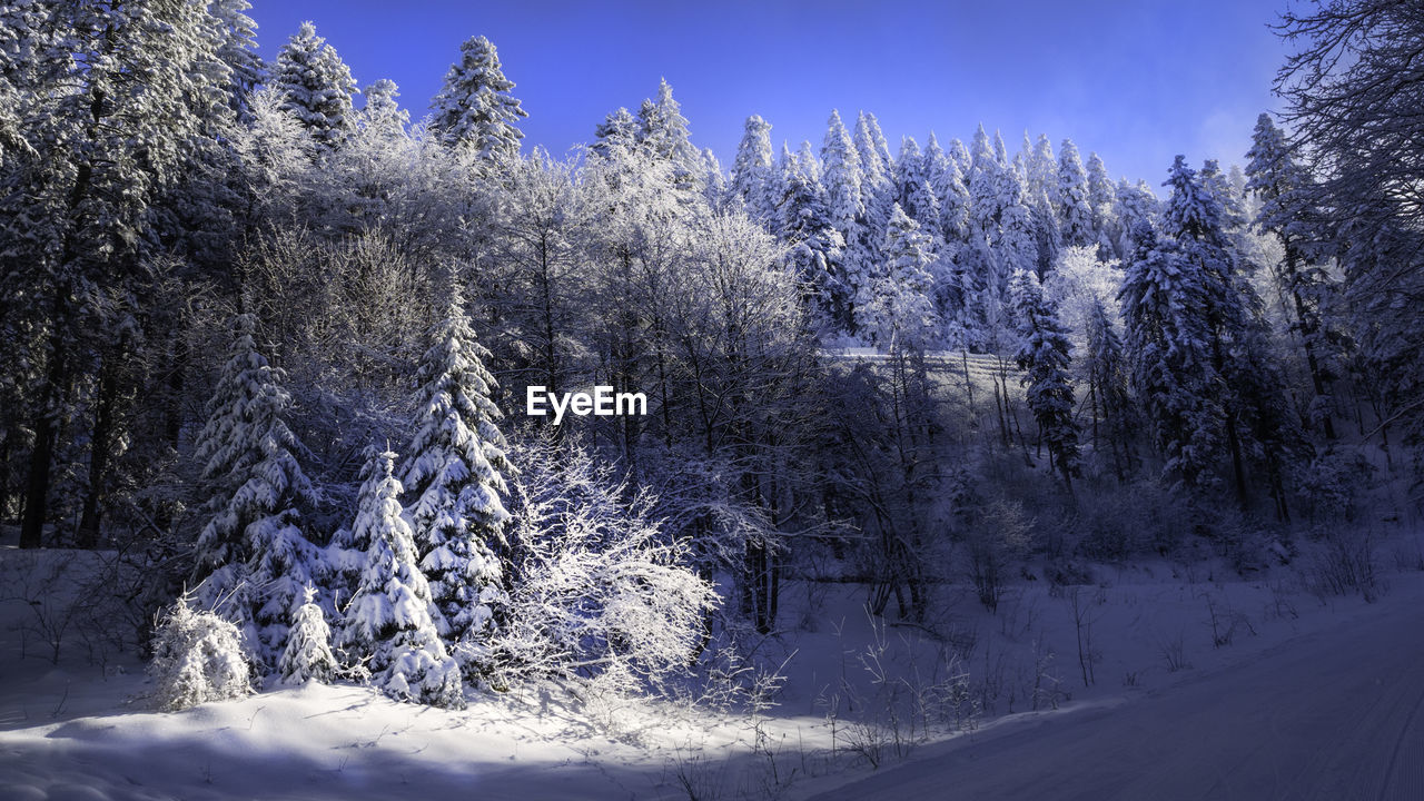 winter, tree, snow, cold temperature, plant, beauty in nature, tranquility, no people, nature, growth, tranquil scene, scenics - nature, day, covering, sky, land, white color, forest, frozen, outdoors, coniferous tree