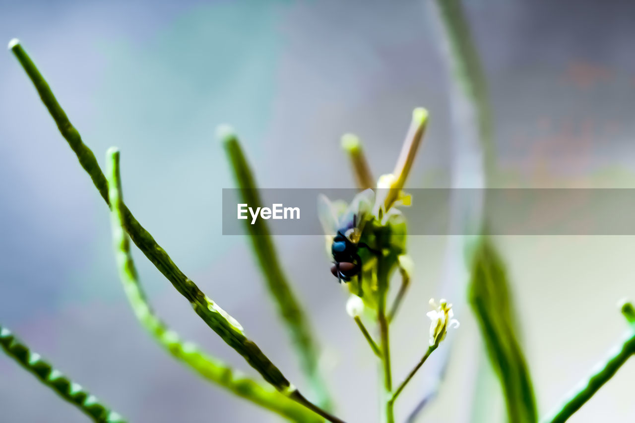 plant, growth, invertebrate, insect, flowering plant, animals in the wild, flower, animal themes, beauty in nature, animal wildlife, animal, fragility, one animal, close-up, vulnerability, freshness, nature, day, no people, selective focus, flower head, outdoors, pollination, pollen