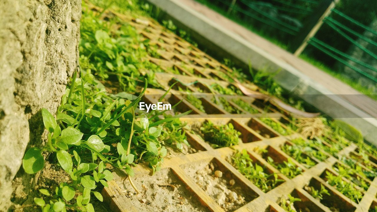 plant, no people, green color, growth, nature, selective focus, high angle view, close-up, day, box, plant part, leaf, outdoors, container, food and drink, focus on foreground, freshness, food, healthy eating, box - container, herb, plantation