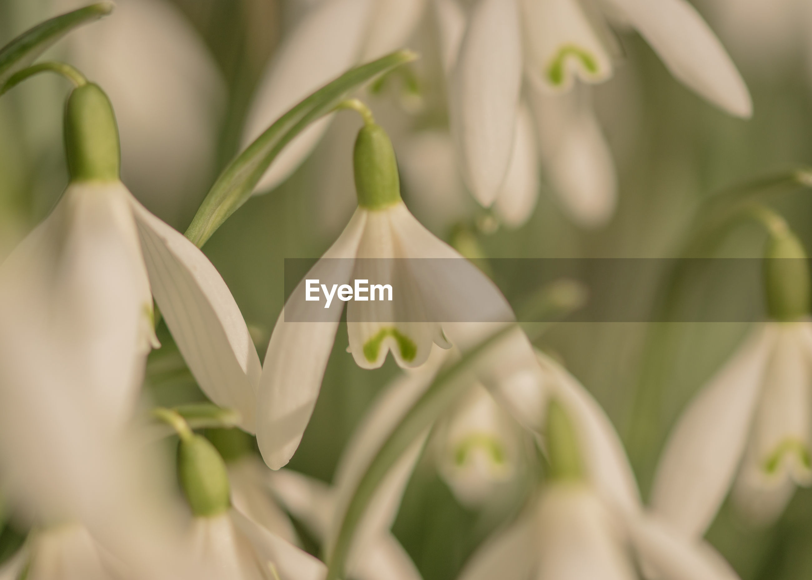 CLOSE-UP OF WHITE FLOWERS