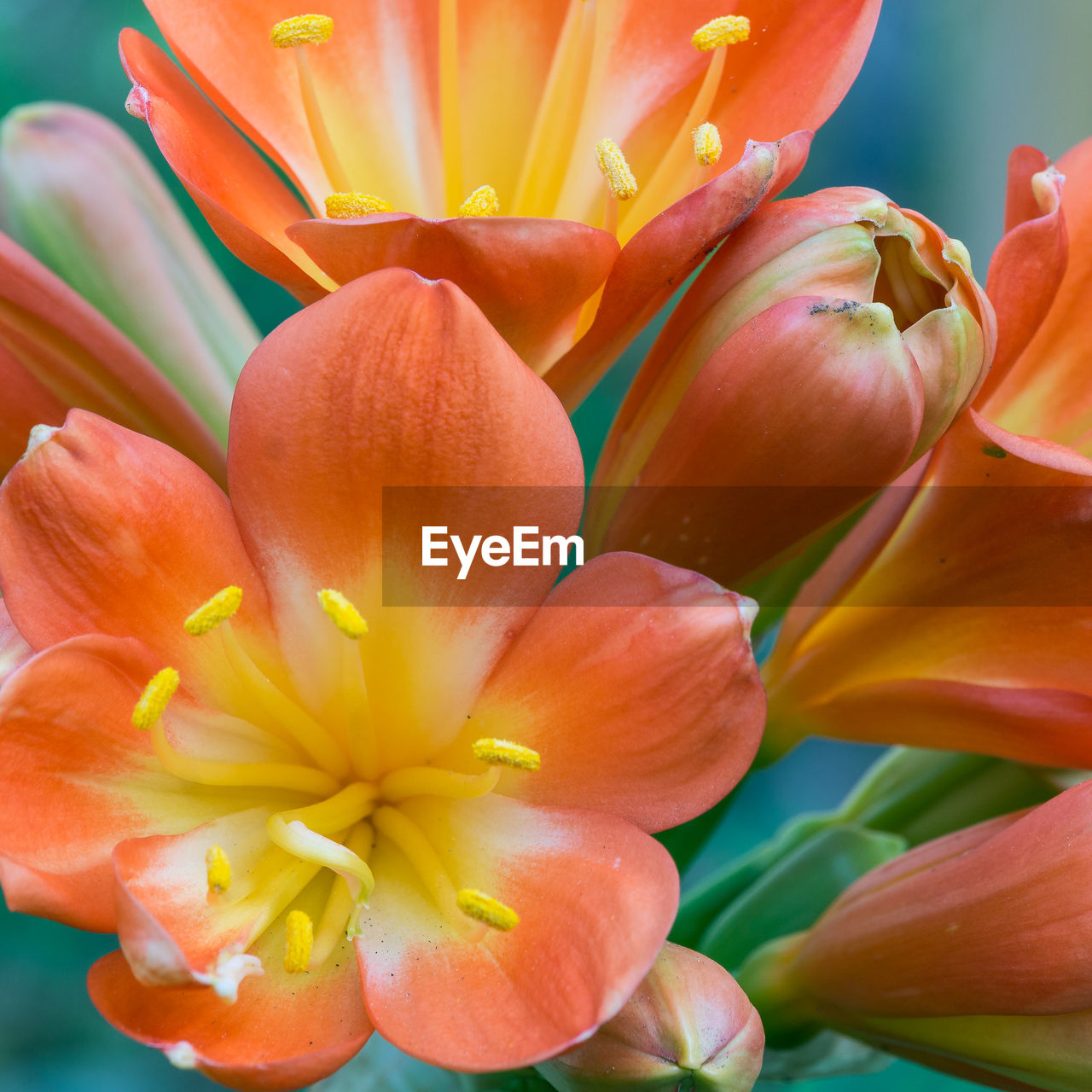 flower, flowering plant, freshness, fragility, vulnerability, petal, plant, beauty in nature, flower head, inflorescence, close-up, yellow, growth, orange color, nature, no people, pollen, focus on foreground, botany, day