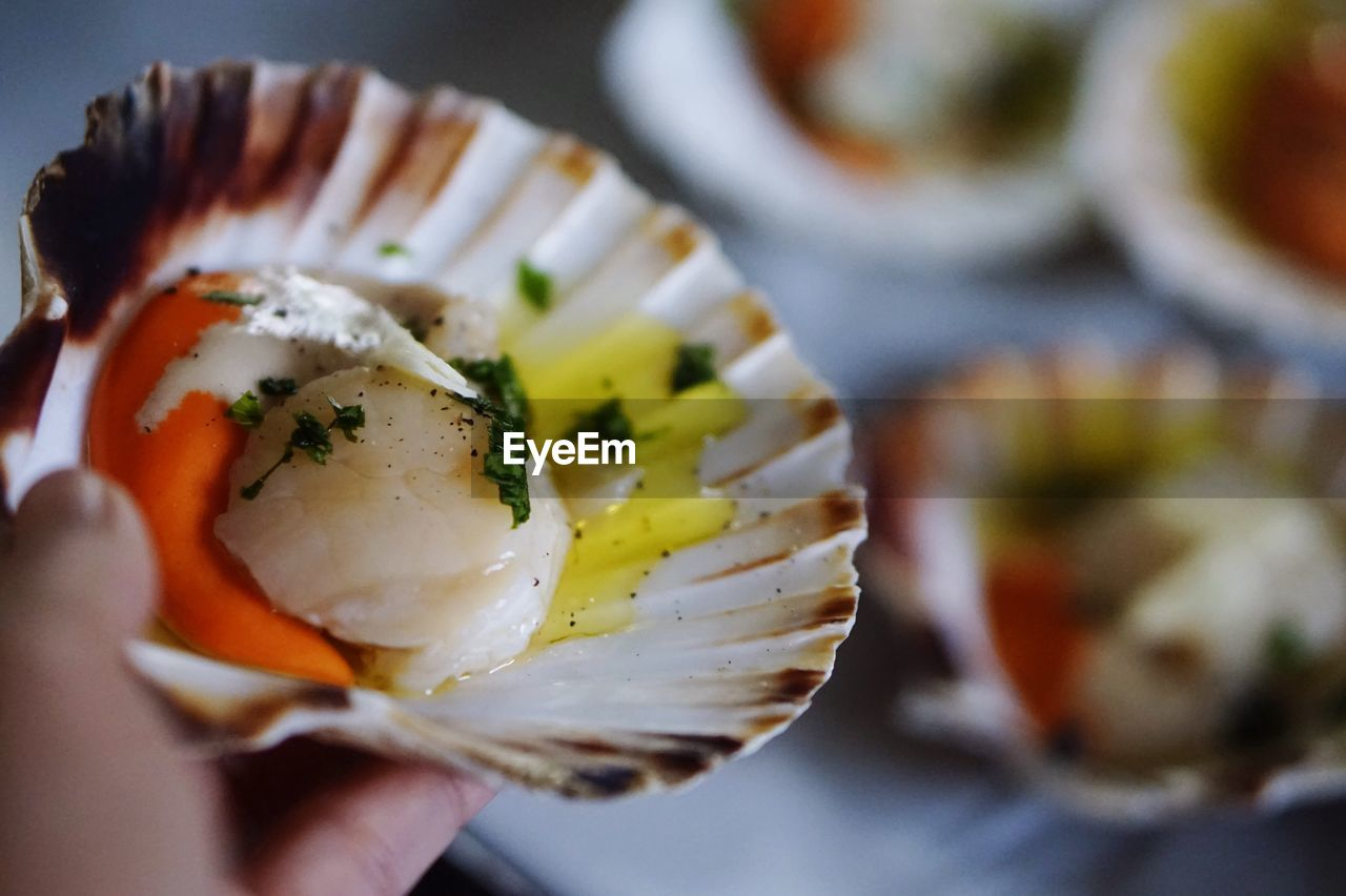 Close-Up Of Hand Holding Scallop