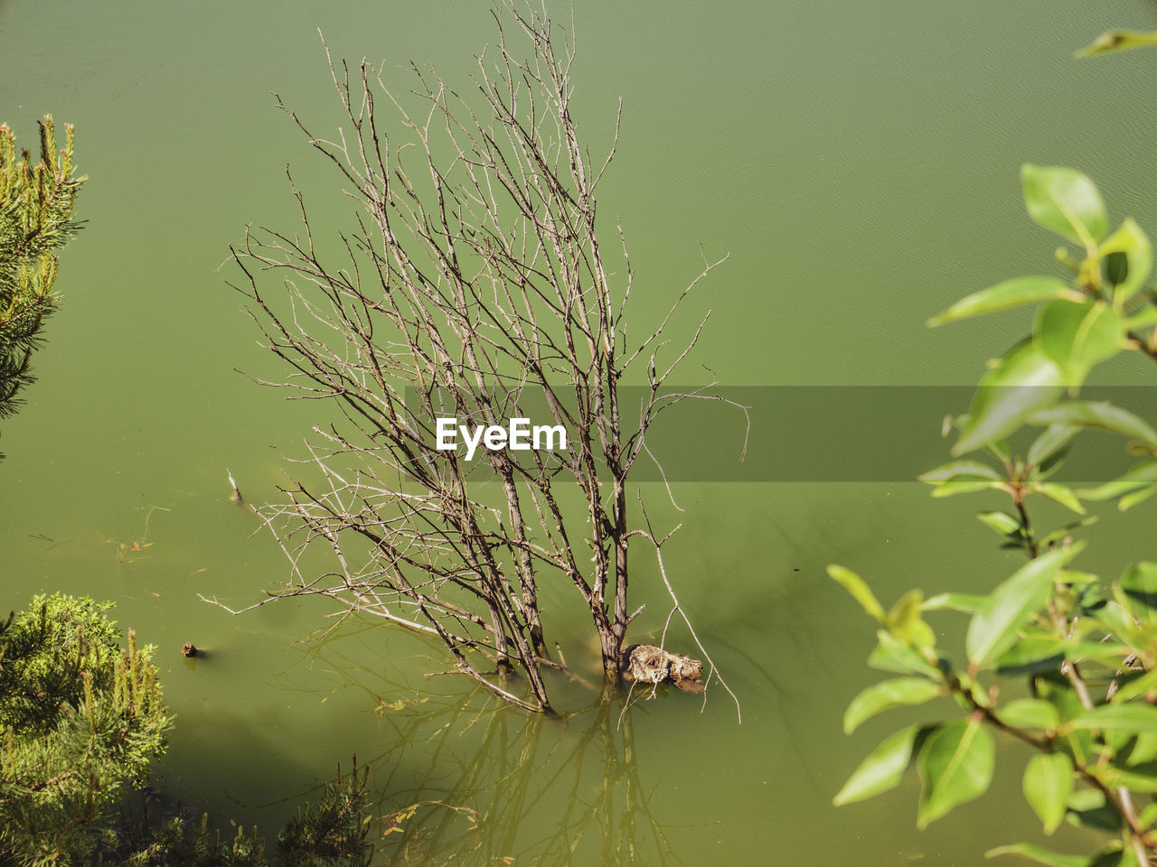 plant, growth, nature, beauty in nature, day, tranquility, no people, leaf, plant part, green color, close-up, outdoors, water, lake, animal wildlife, focus on foreground, animals in the wild, animal, tree