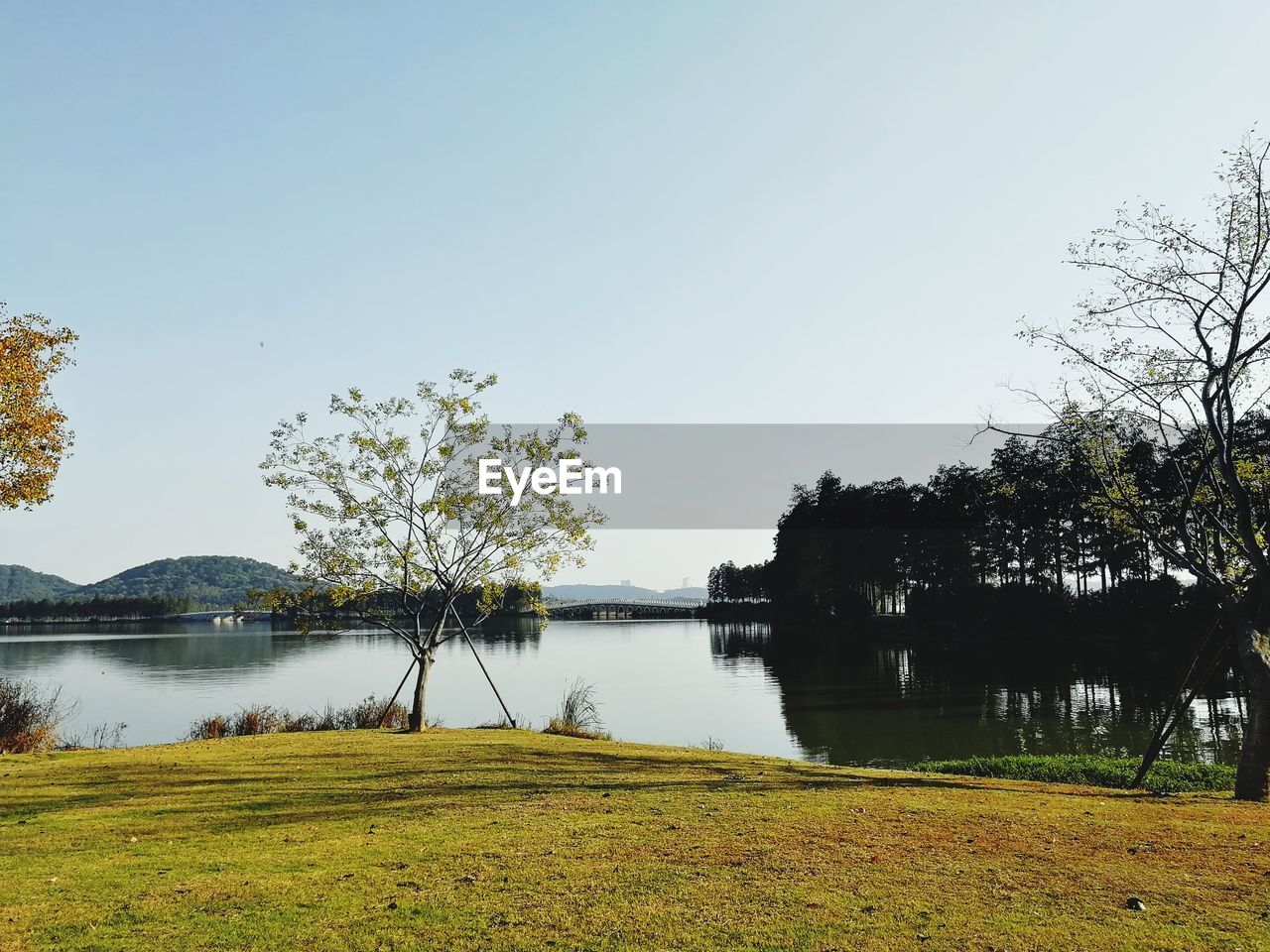 water, lake, plant, tree, tranquility, sky, tranquil scene, beauty in nature, scenics - nature, reflection, grass, nature, clear sky, green color, no people, day, growth, copy space, non-urban scene, outdoors