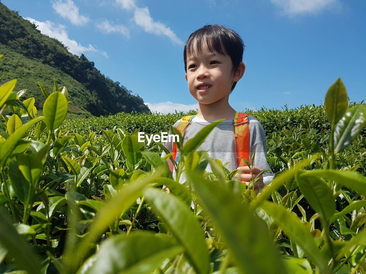 Boy standing at tea plantation against blue sky