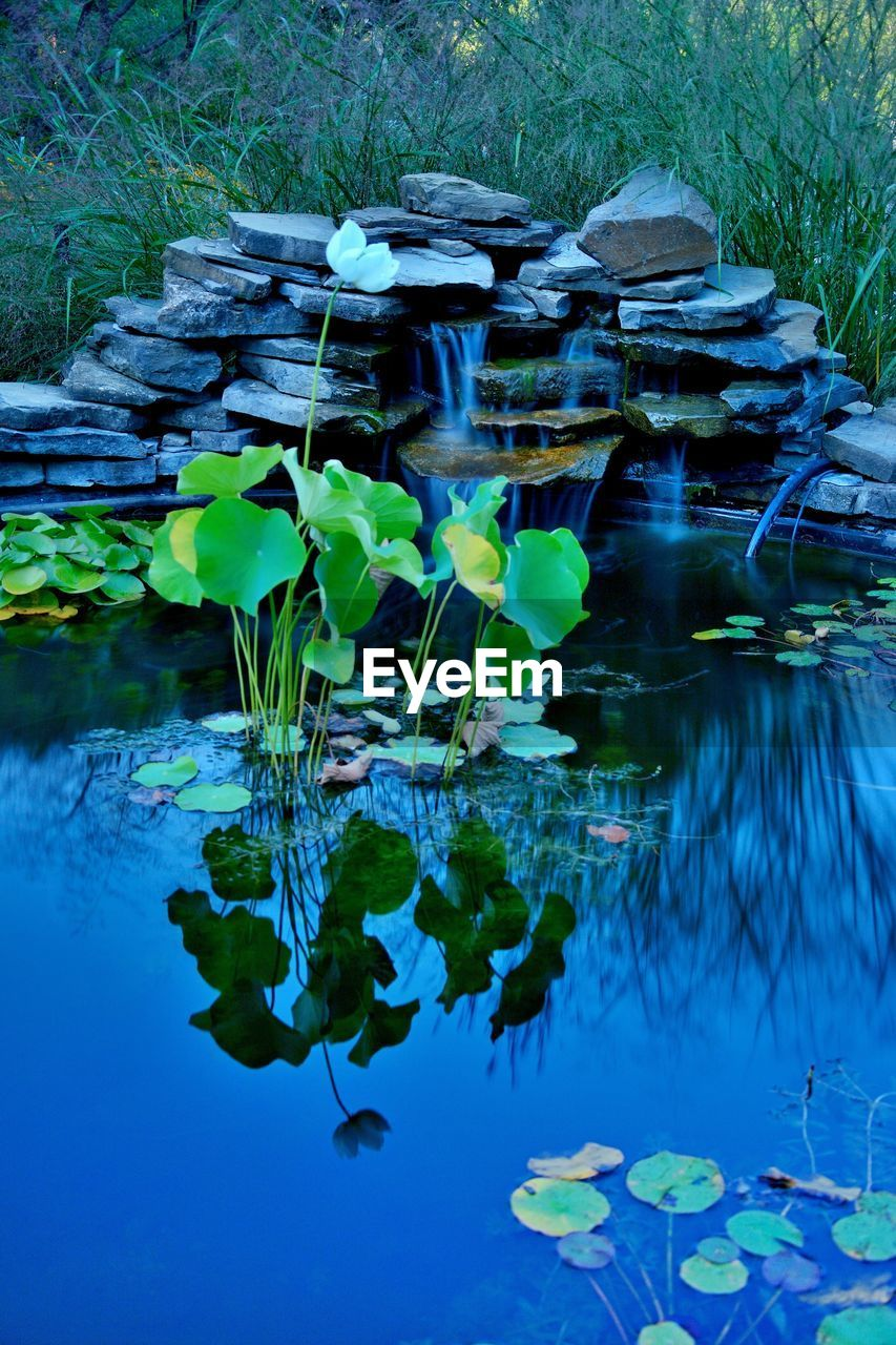 water, lake, plant, nature, reflection, waterfront, floating, floating on water, day, no people, flower, blue, leaf, plant part, beauty in nature, growth, water lily, tranquility, outdoors, lotus water lily, leaves