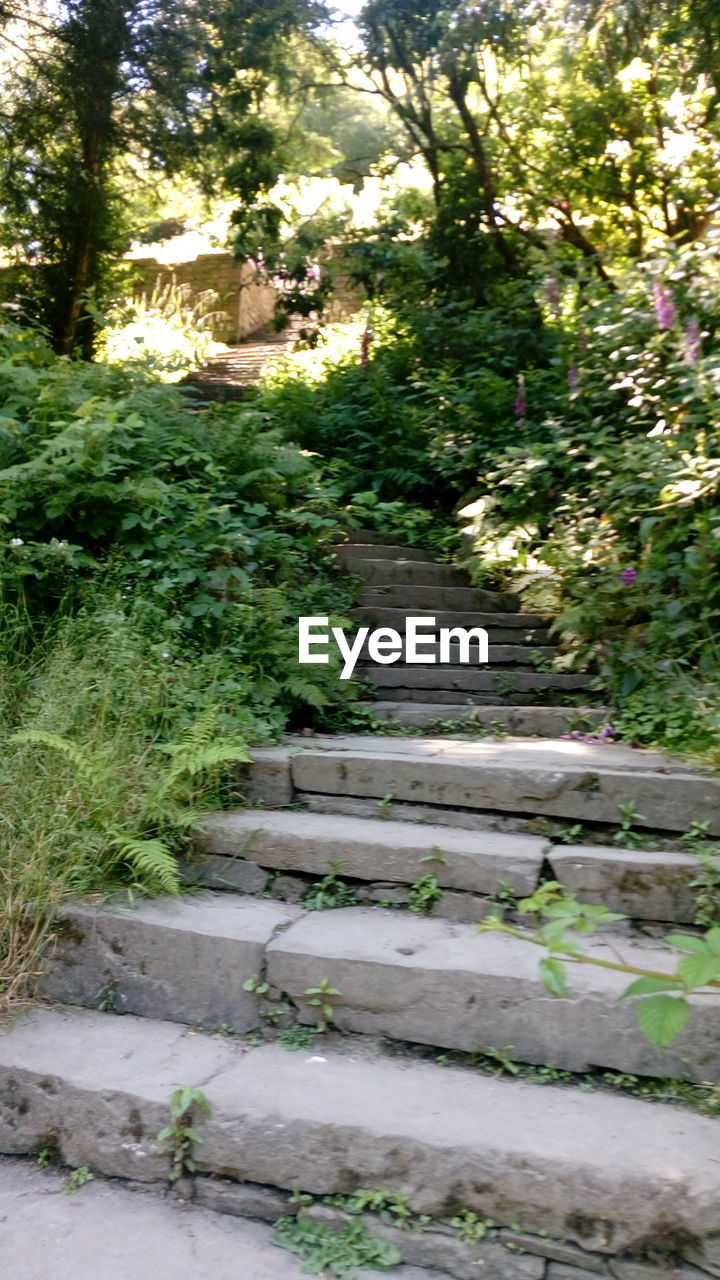 growth, nature, steps, tree, steps and staircases, plant, the way forward, day, tranquility, outdoors, no people, beauty in nature, grass