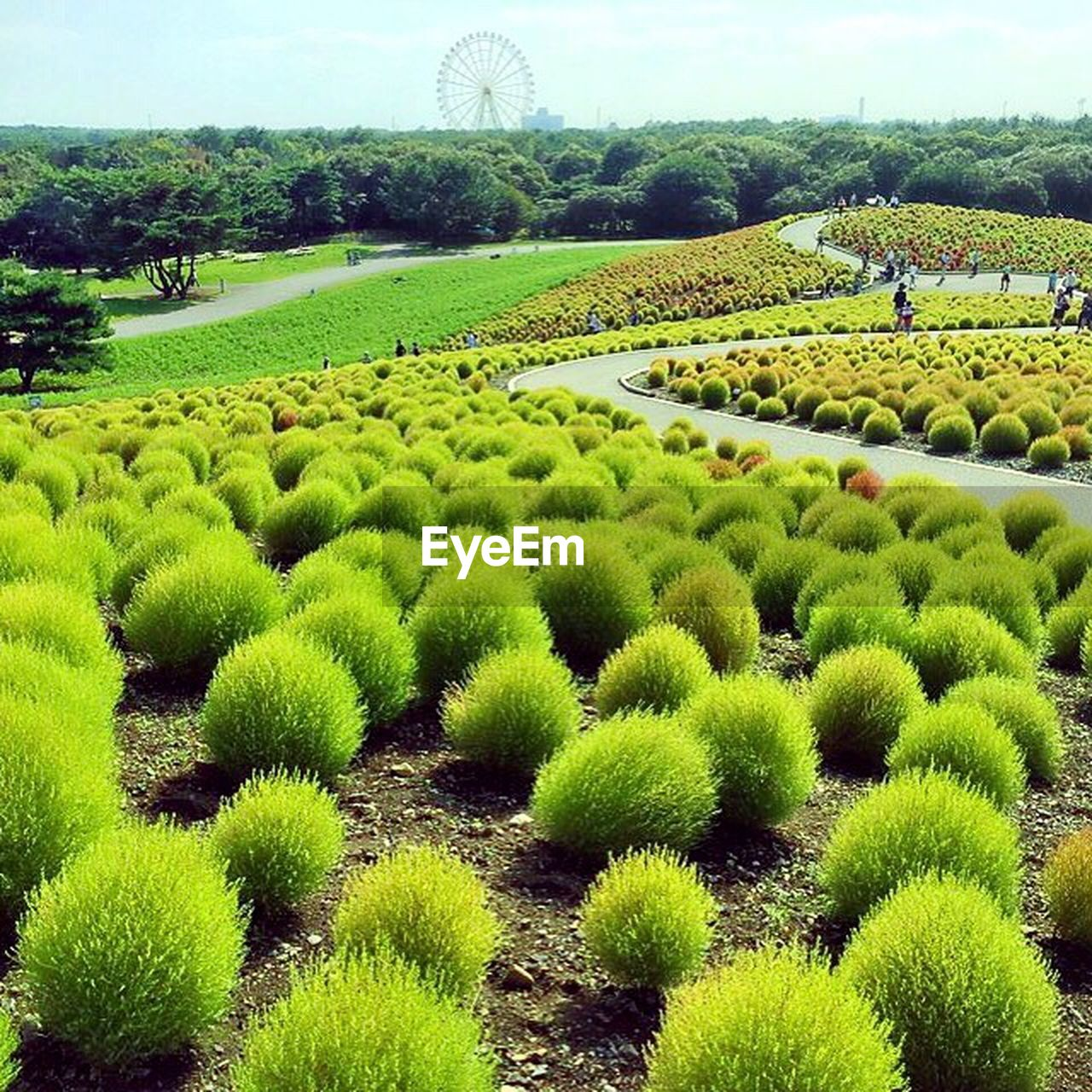 growth, agriculture, field, green color, nature, beauty in nature, landscape, outdoors, plant, day, tree, no people, rice paddy, freshness, sky