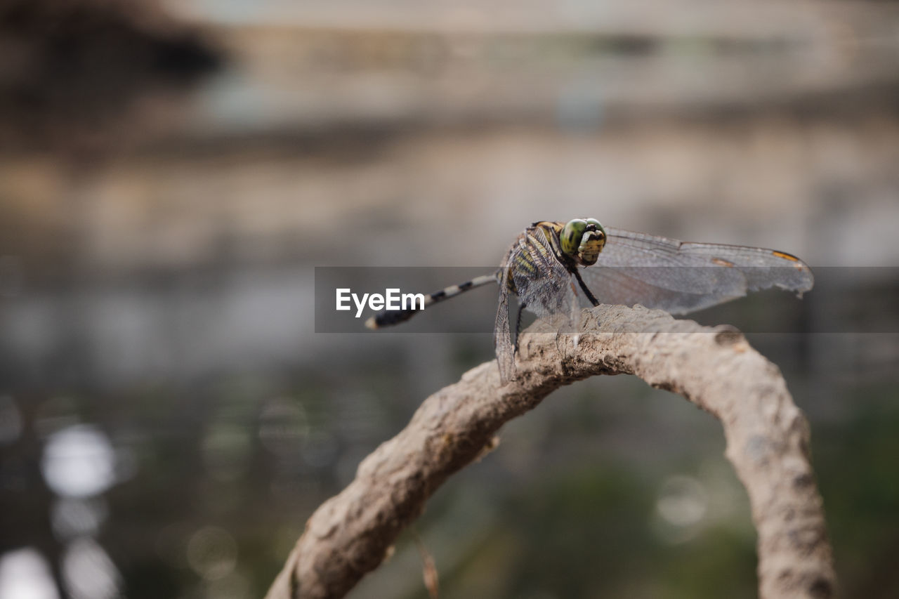 animal wildlife, one animal, animals in the wild, animal, animal themes, focus on foreground, vertebrate, no people, day, bird, nature, close-up, branch, plant, outdoors, perching, selective focus, insect, tree, invertebrate