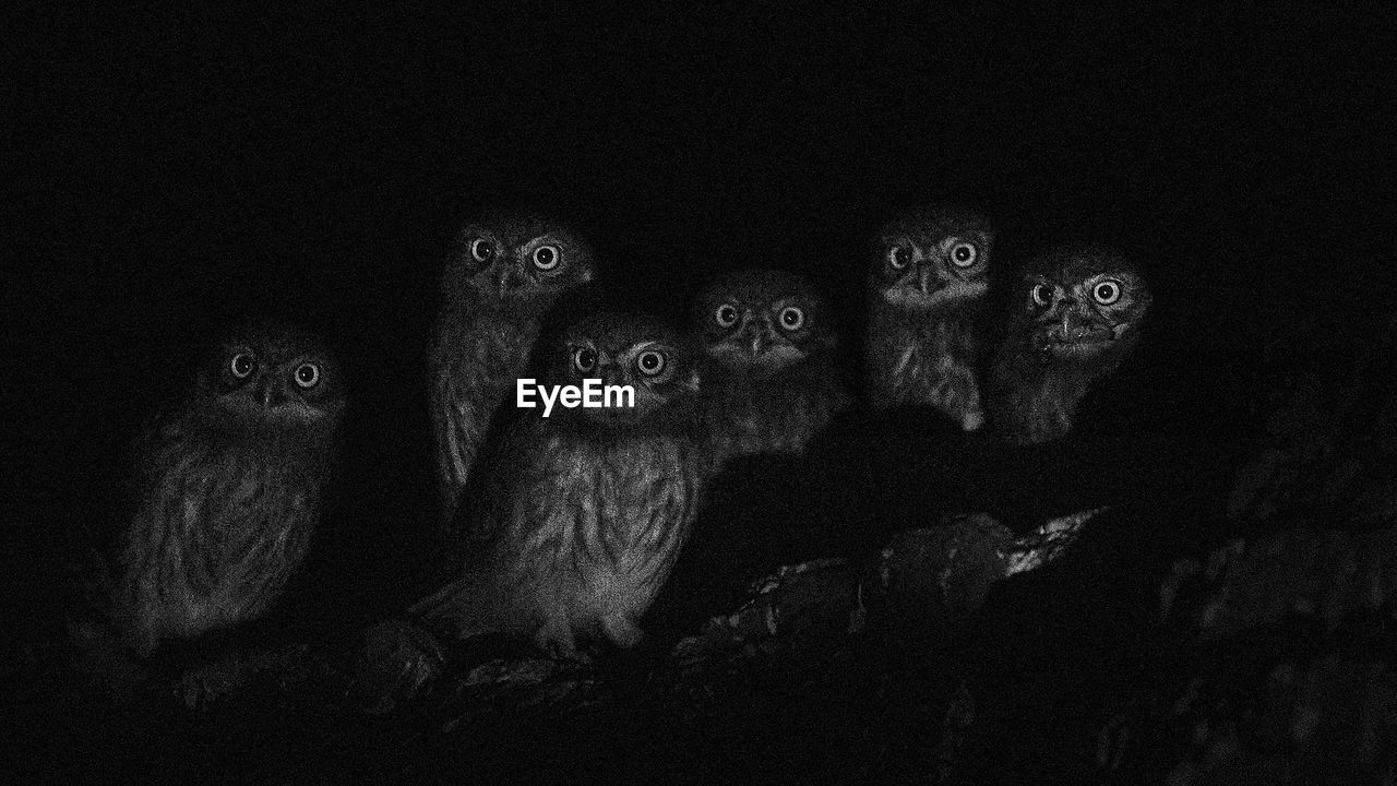 Low Angle Portrait Of Owls Against Sky At Night