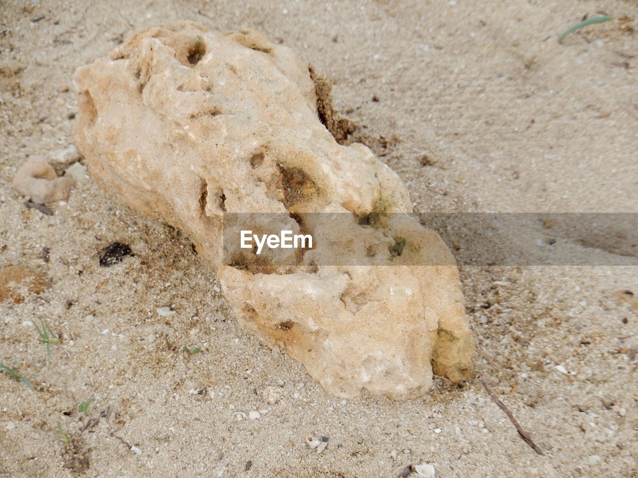 land, beach, sand, no people, close-up, nature, high angle view, day, animal, animal themes, outdoors, brown, animal wildlife, bone, textured, sea, beige, animal body part, one animal, body part, marine