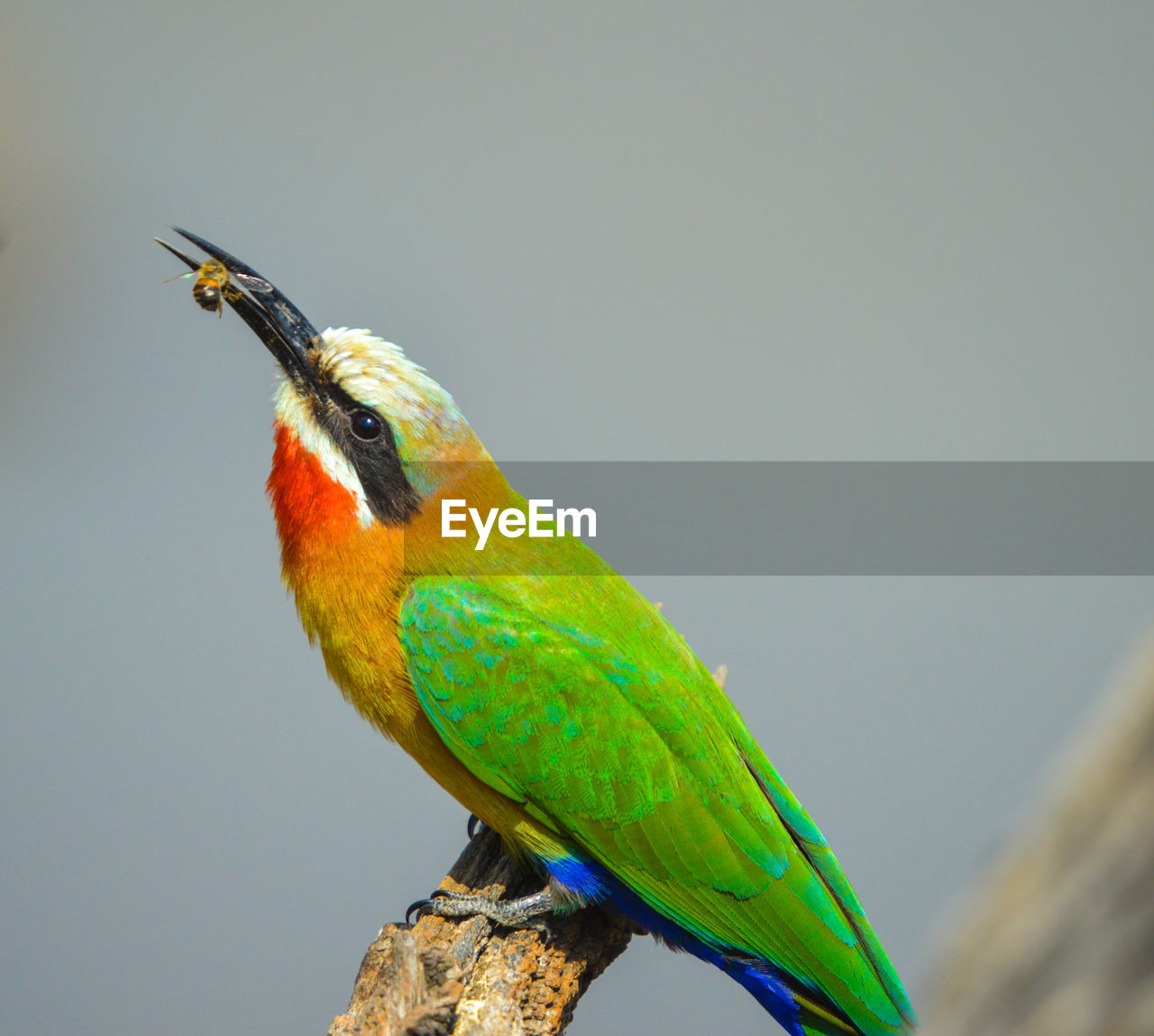 bird, animal themes, animal wildlife, vertebrate, animal, animals in the wild, one animal, perching, close-up, day, no people, nature, focus on foreground, parrot, copy space, multi colored, beauty in nature, beak, tree, green color, outdoors