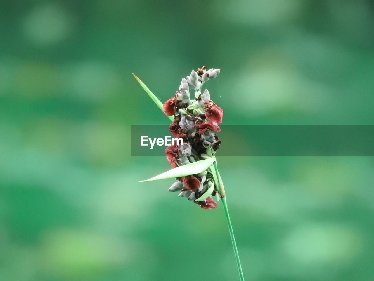 insect, animal themes, animals in the wild, flower, nature, no people, day, one animal, focus on foreground, close-up, outdoors, animal wildlife, fragility, beauty in nature