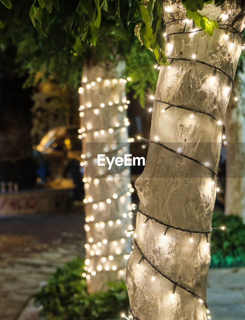 focus on foreground, plant, no people, tree, close-up, day, nature, outdoors, lighting equipment, decoration, tree trunk, trunk, growth, sunlight, illuminated, pattern, metal, creativity, park, bamboo - plant