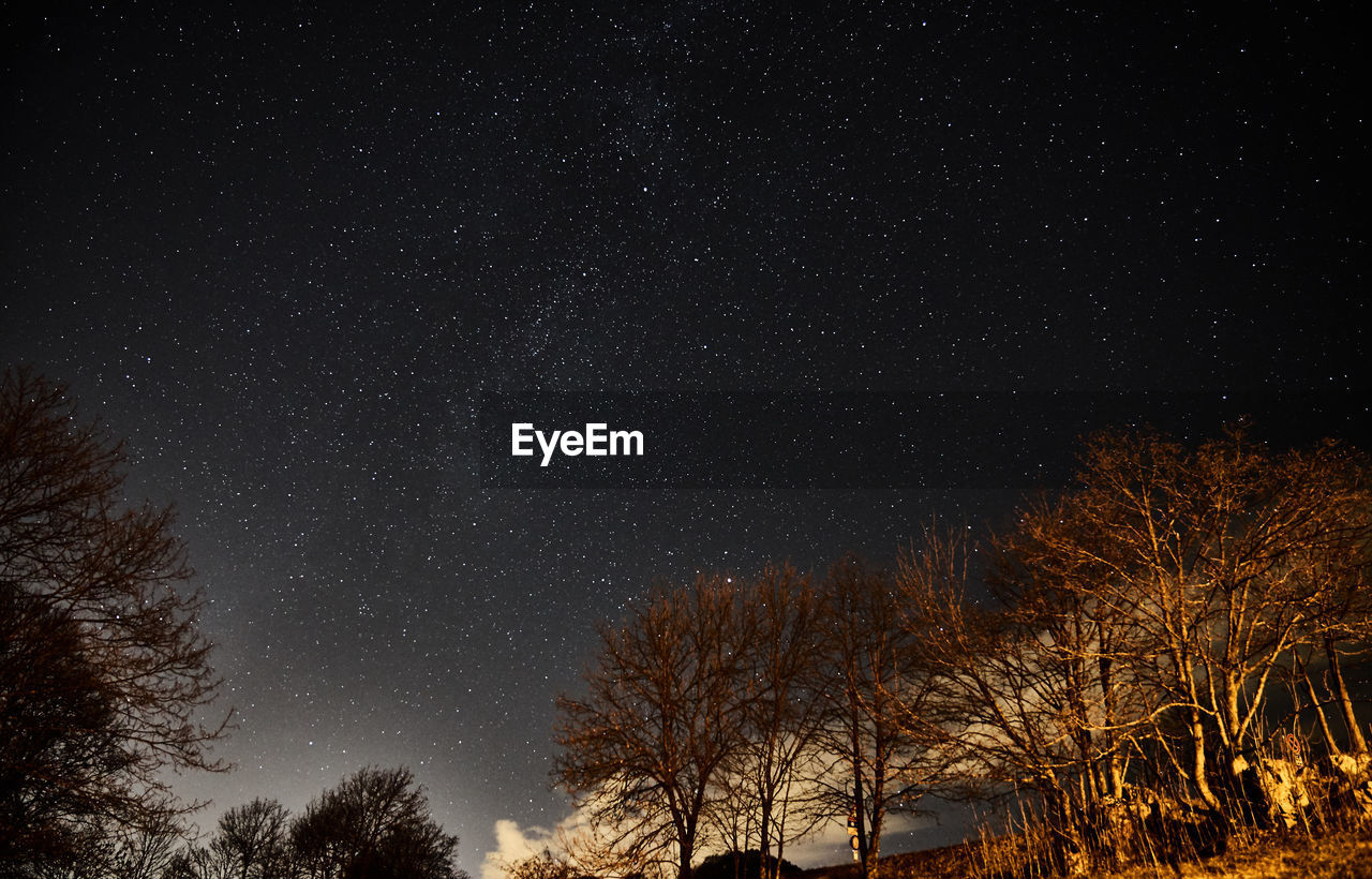 night, tree, star - space, space, sky, astronomy, plant, beauty in nature, scenics - nature, low angle view, tranquility, no people, nature, star, tranquil scene, bare tree, star field, galaxy, growth, outdoors, snowing